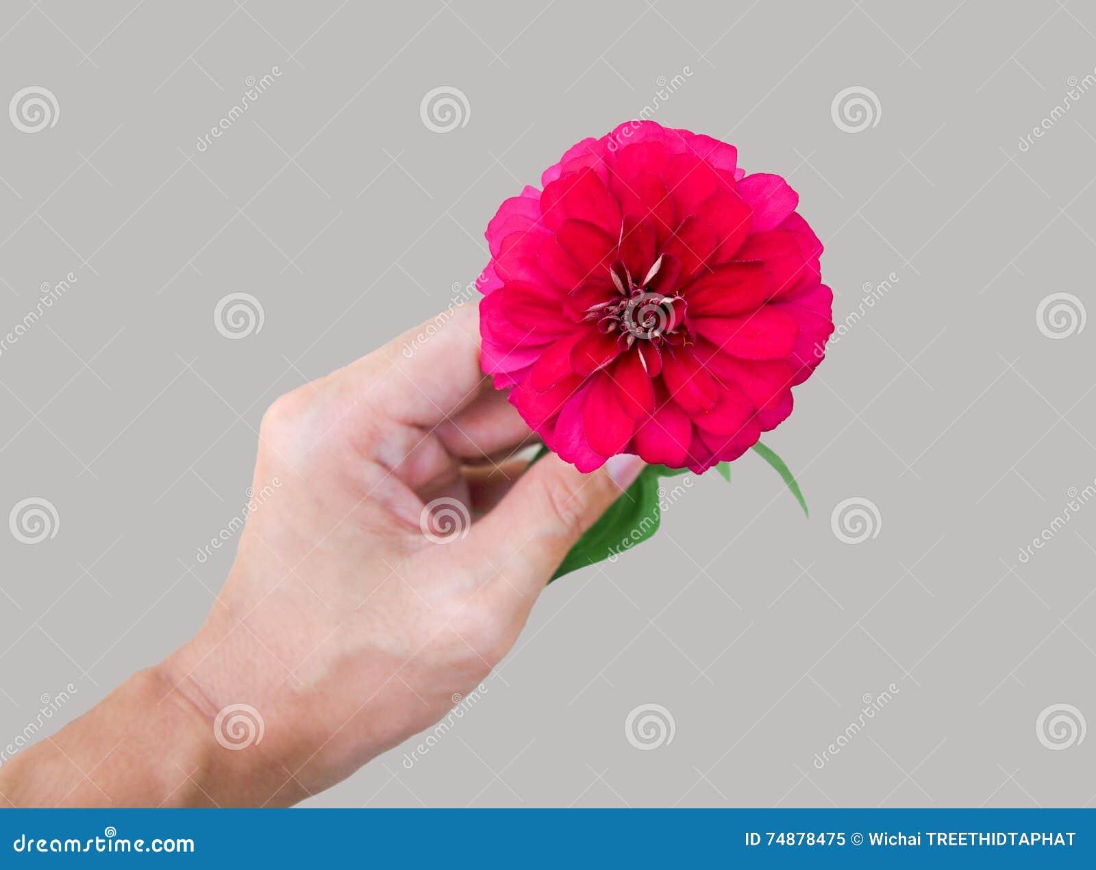 Fleur rouge dans une main