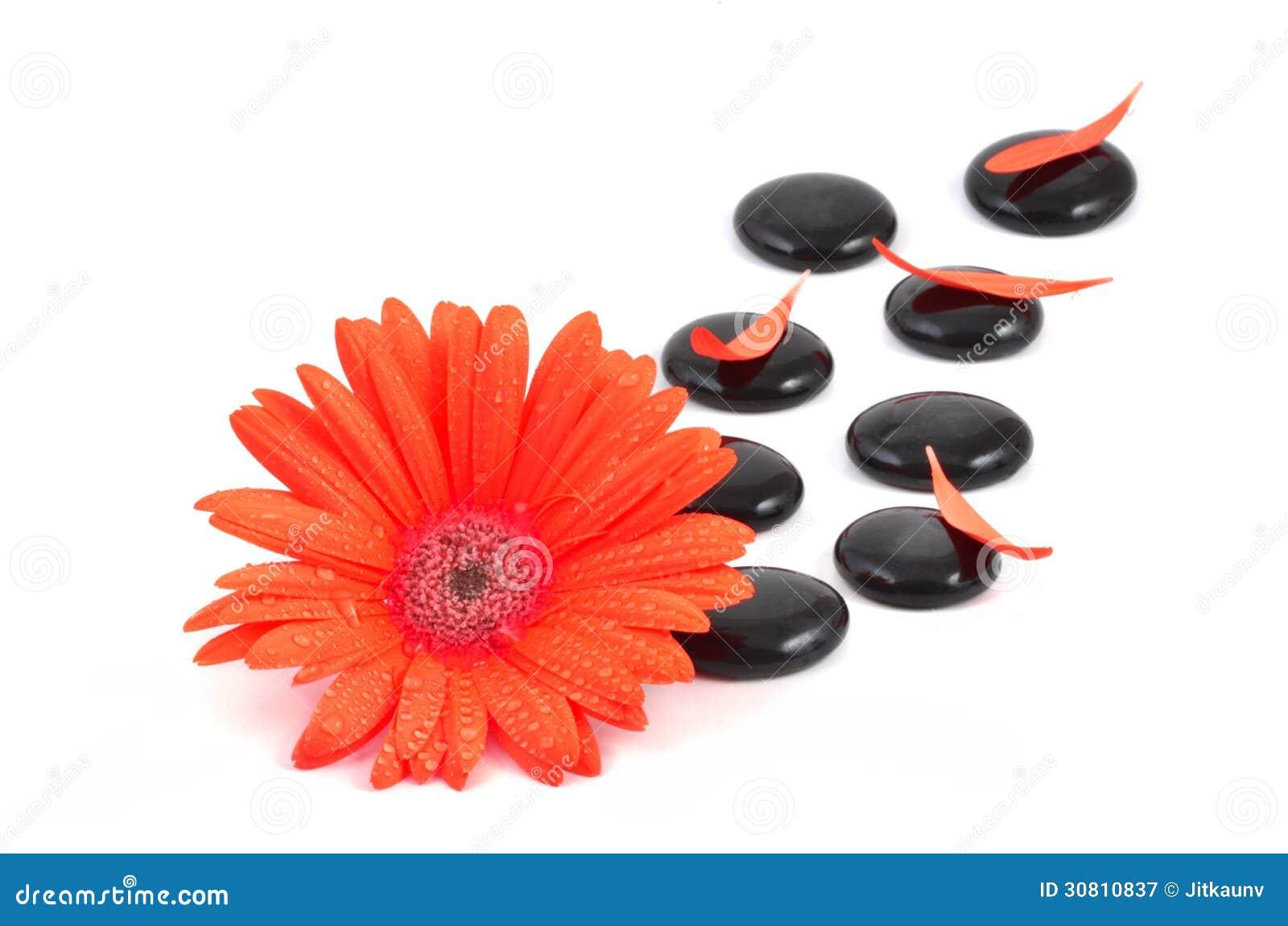 Fleur rouge de gerbera et pierre noire de zen Photographie stock libre de droits