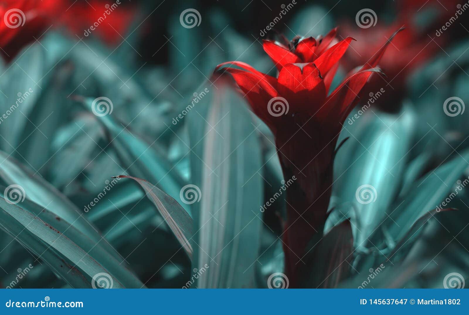 Fleur rouge exotique