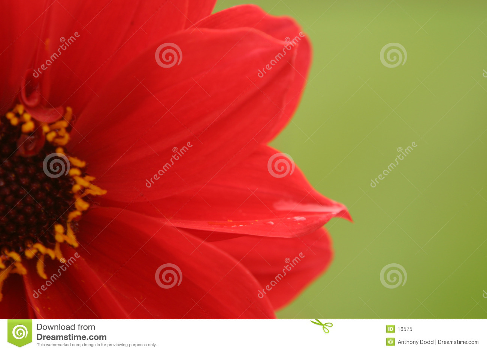 Fleur rouge, fond vert