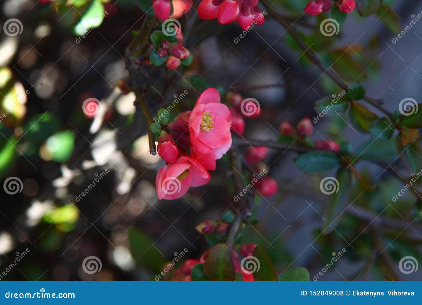 Fleur rouge sur l arbre sur la banque du macro tir de rivière