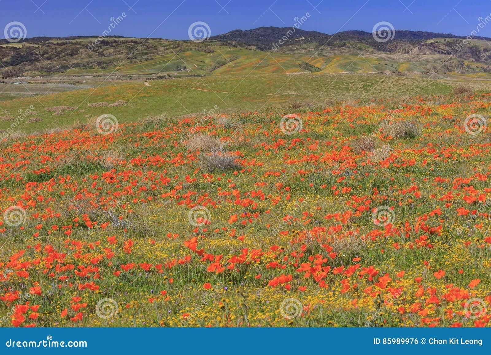 Fleur sauvage à la vallée d antilope