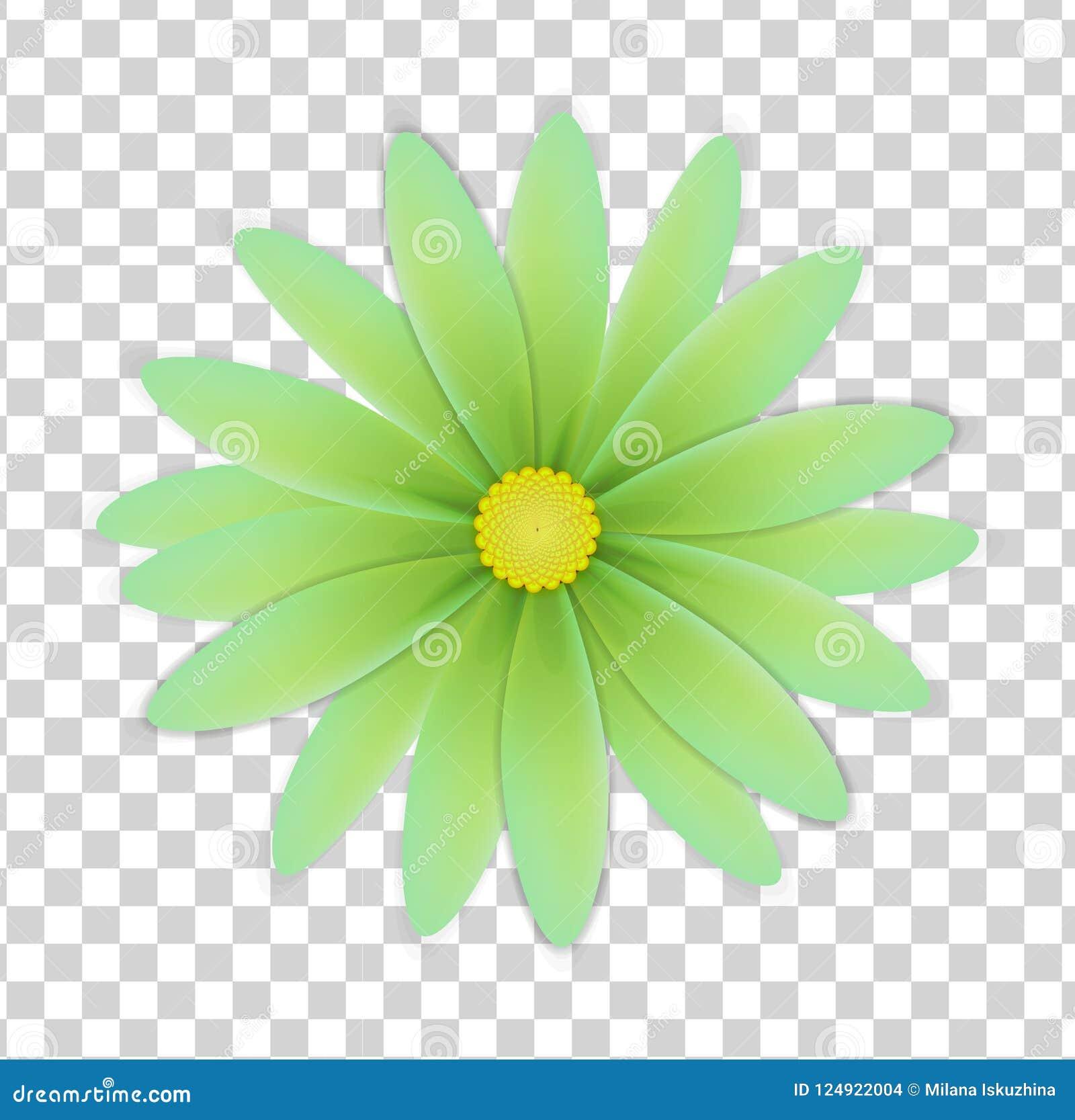 Fleur Simple De Couleurs Vertes Sur Un Fond Transparent