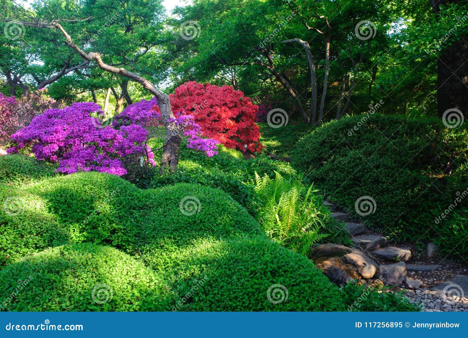 Fleur Succulente Des Rhododendrons Dans Le Jardin Japonais A Prague