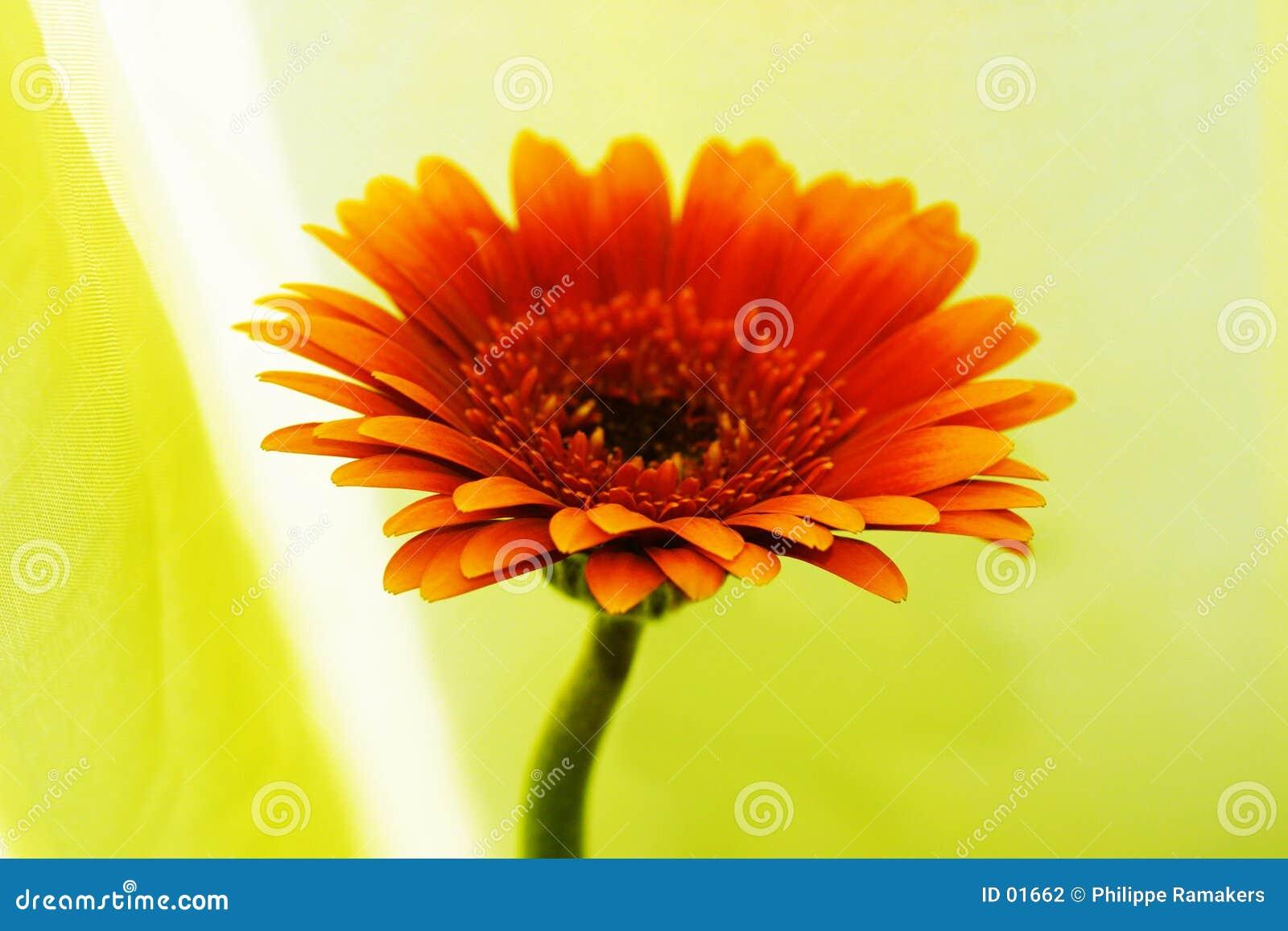 Fleur superbe