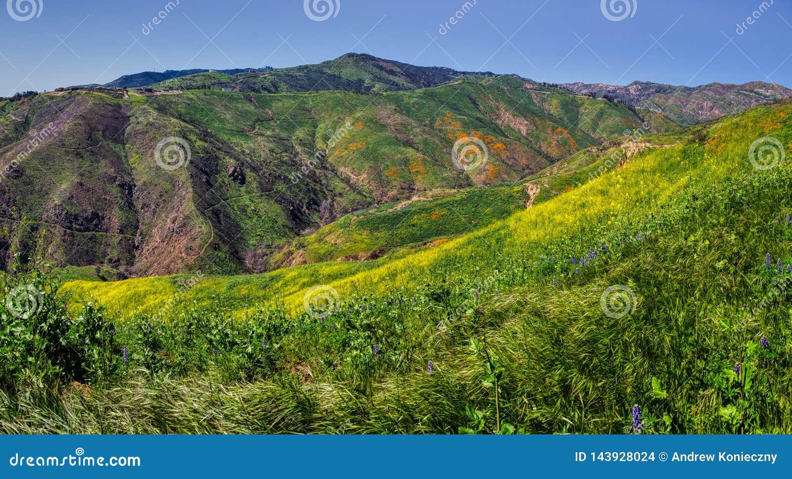 Fleur superbe colorée au panorama de canyon de corral