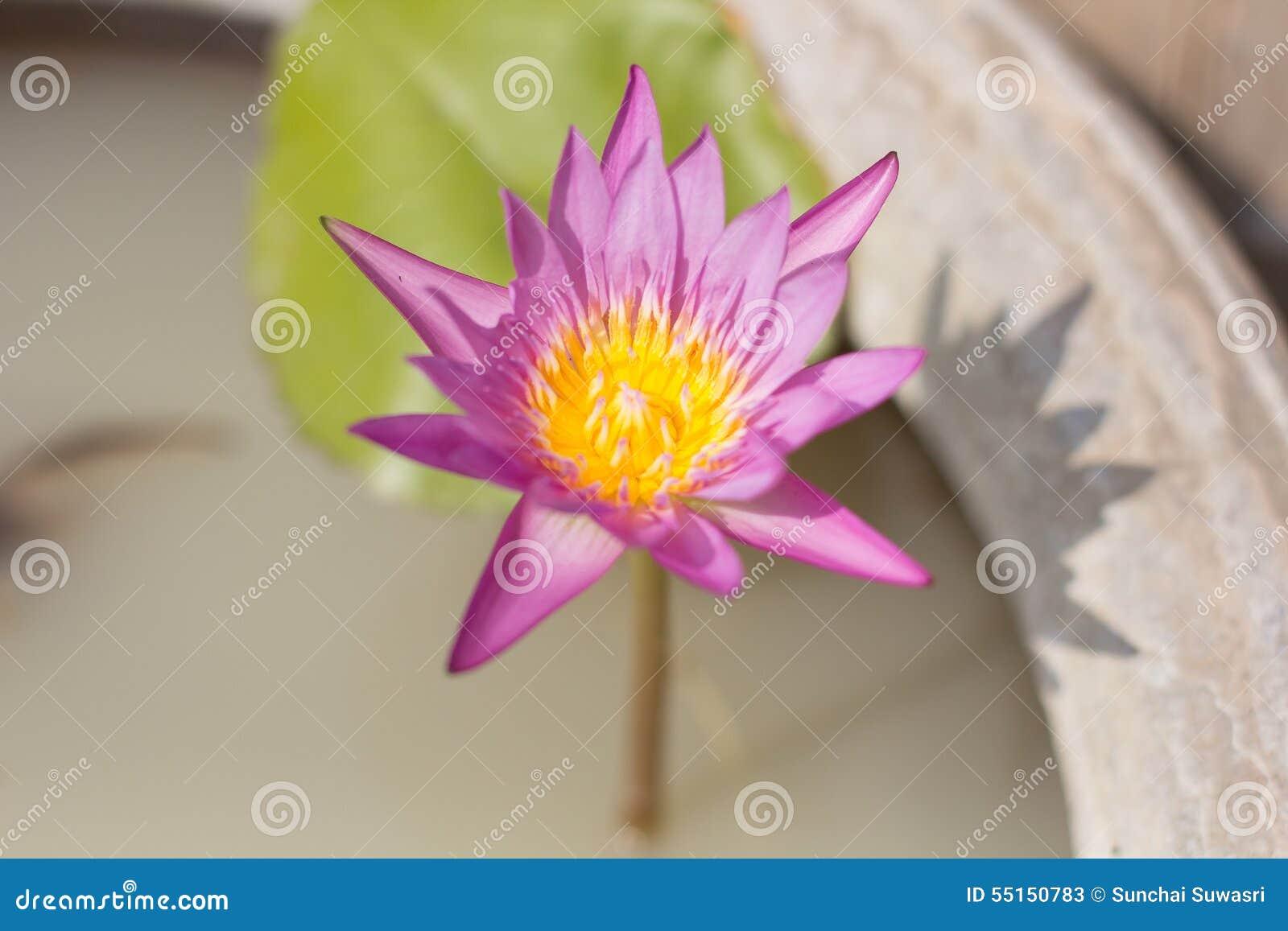 Fleur sur le pot