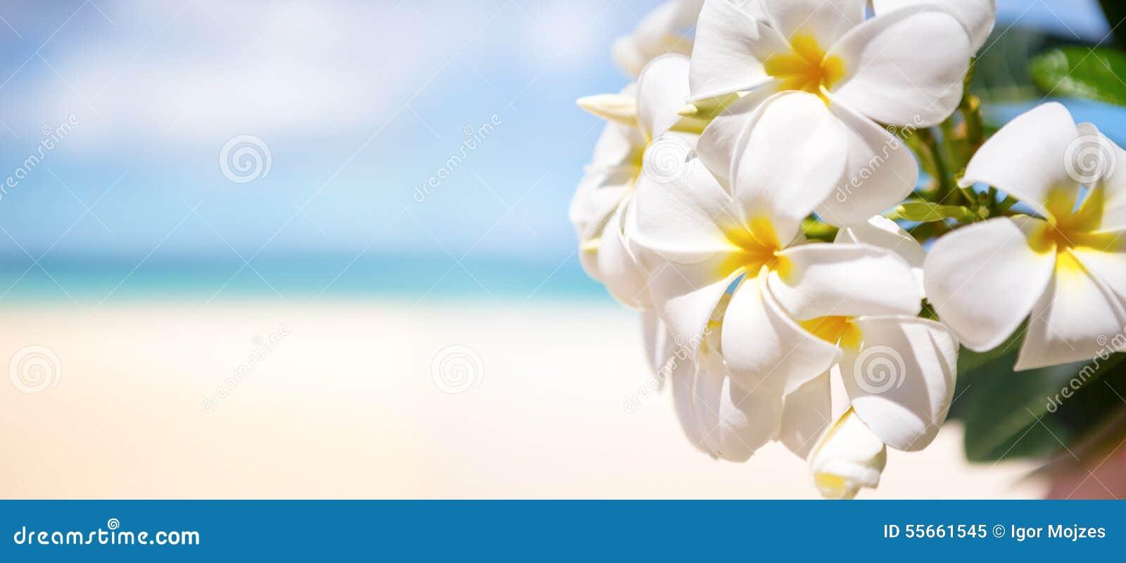 Fleur Tropicale Blanche Au Dessus De Belle Plage Image Stock Image