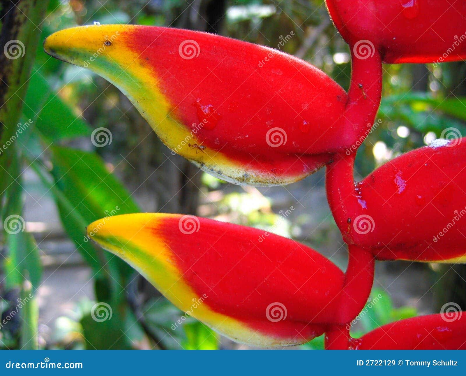 Fleur tropicale dans le paradis