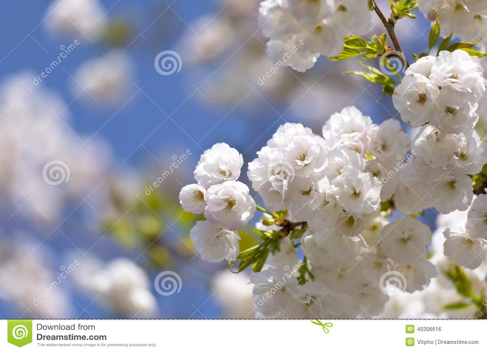 Fleur Unique De Ressort De Tendresse Photo Stock Image Du Couleur