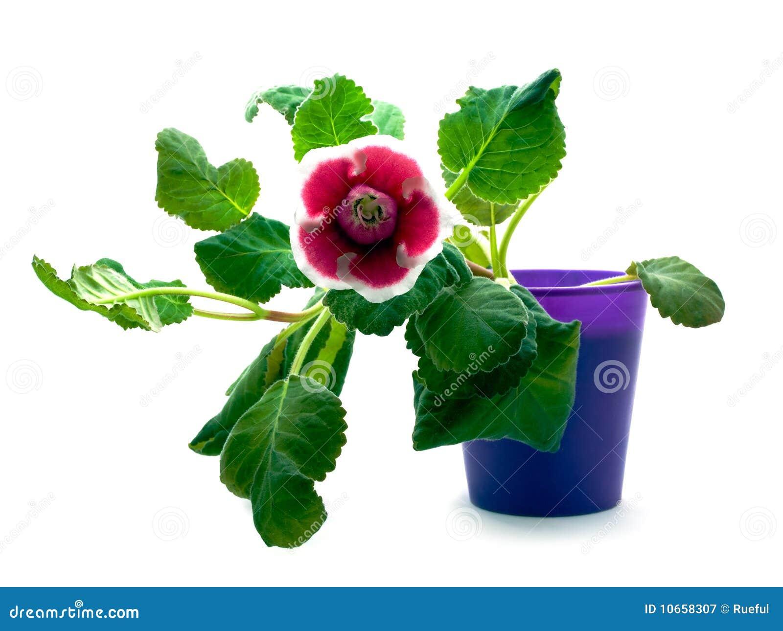 Fleur Verte Avec La Fleur Rouge Image Stock Image Du Simple