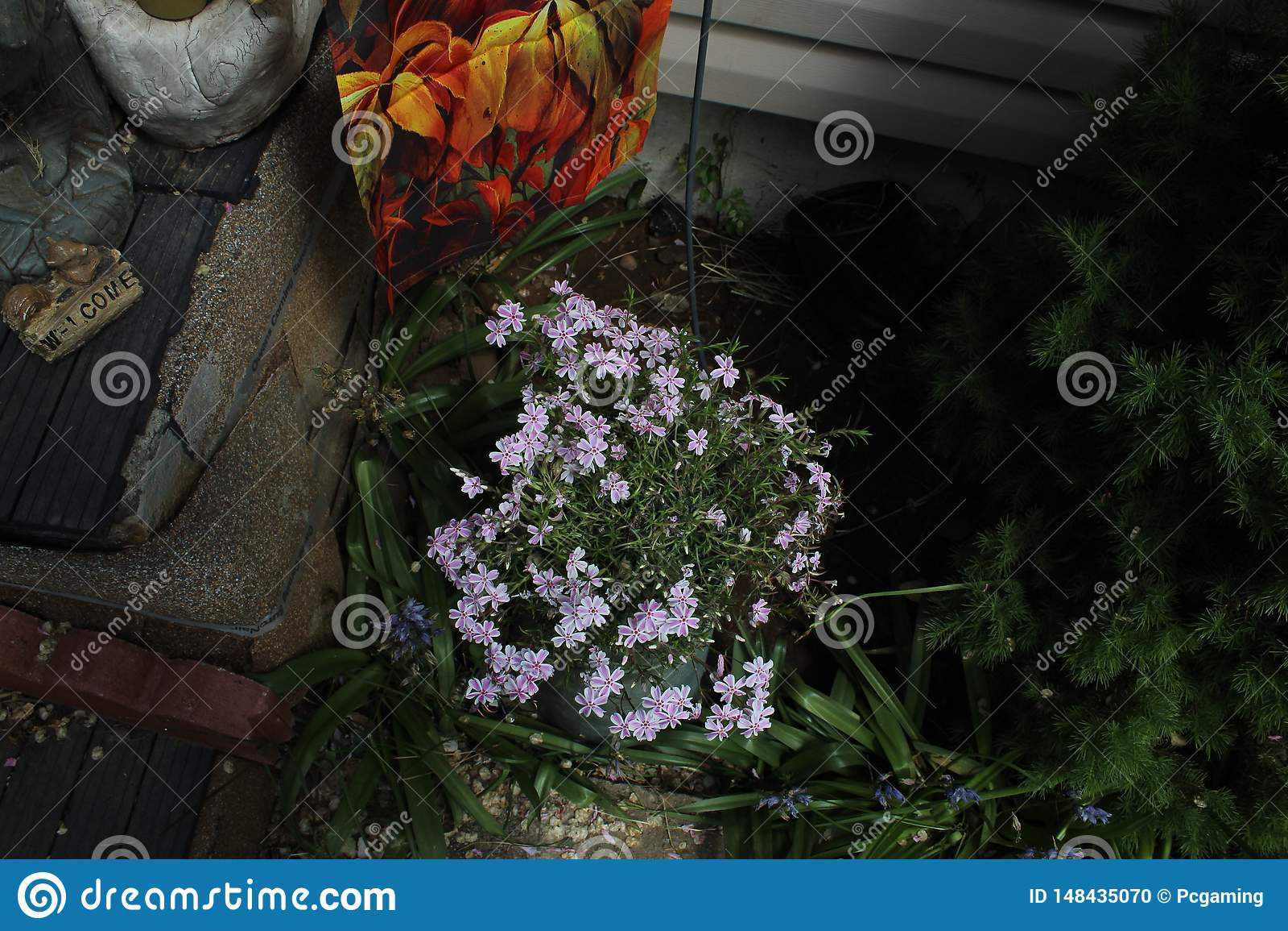 Fleur violac?e blanche
