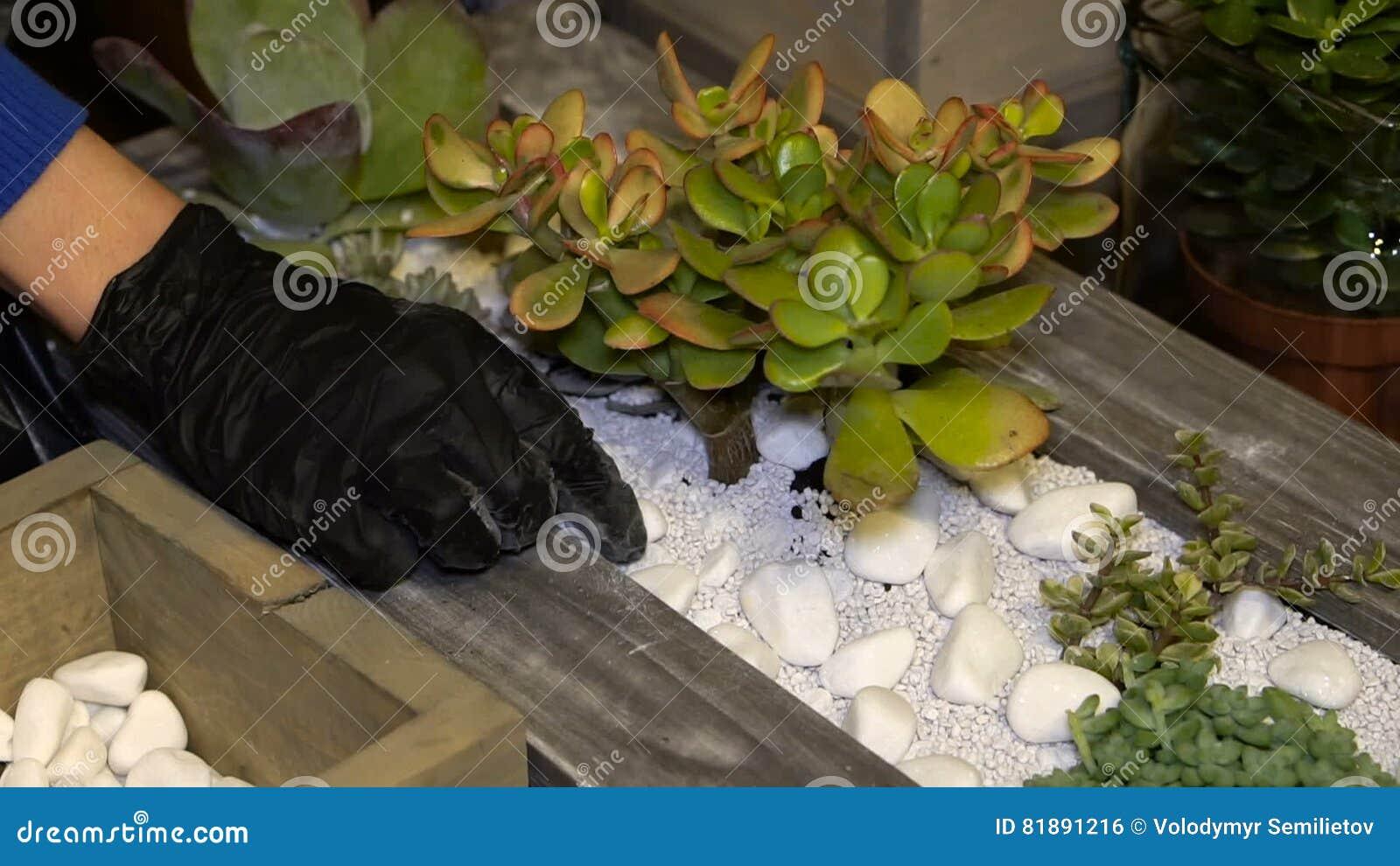 Fleuriste De Femme Faisant Le Mini Jardin Japonais Dans Un Pot De ...