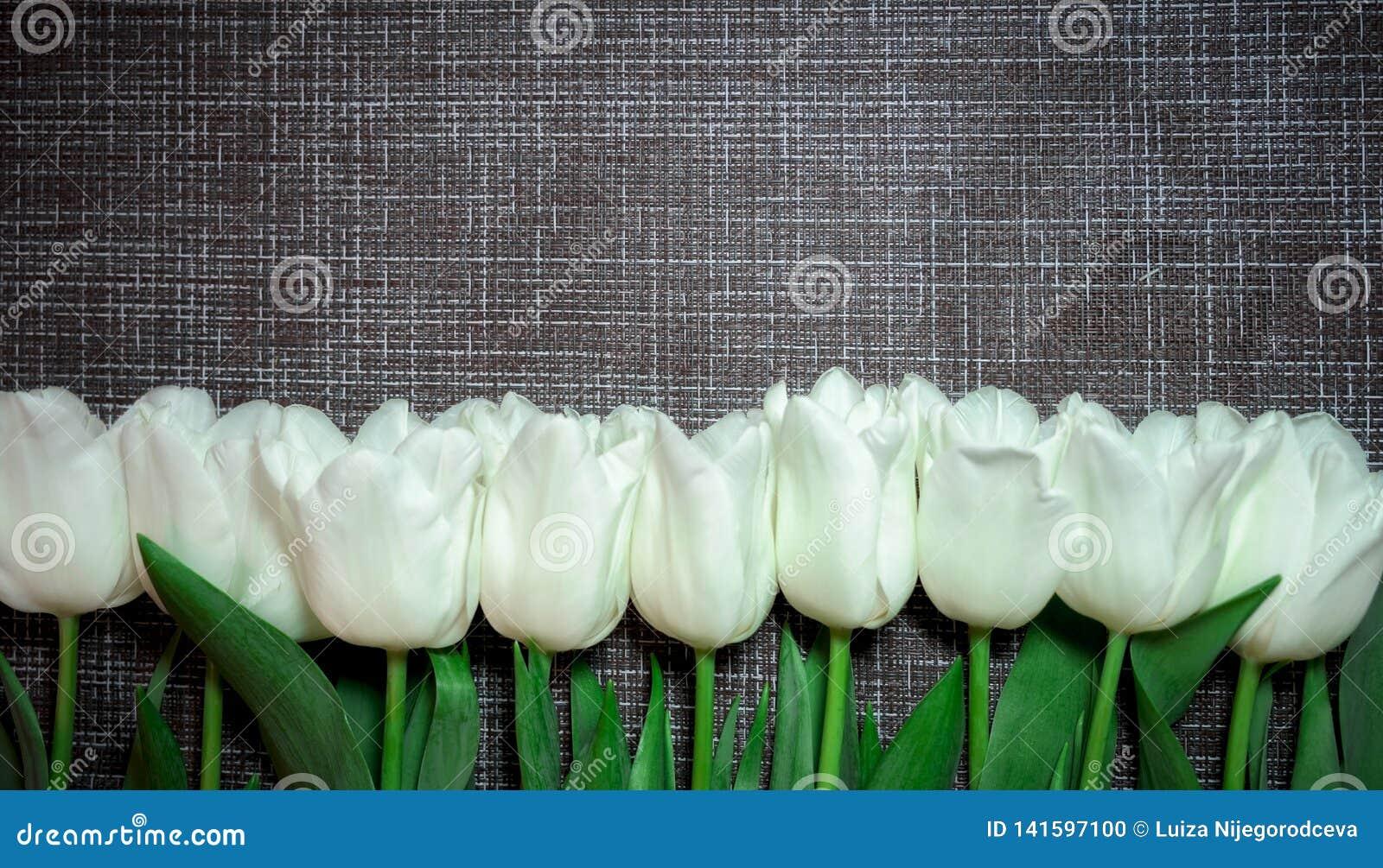 Fleurit les tulipes blanches sur le fond gris