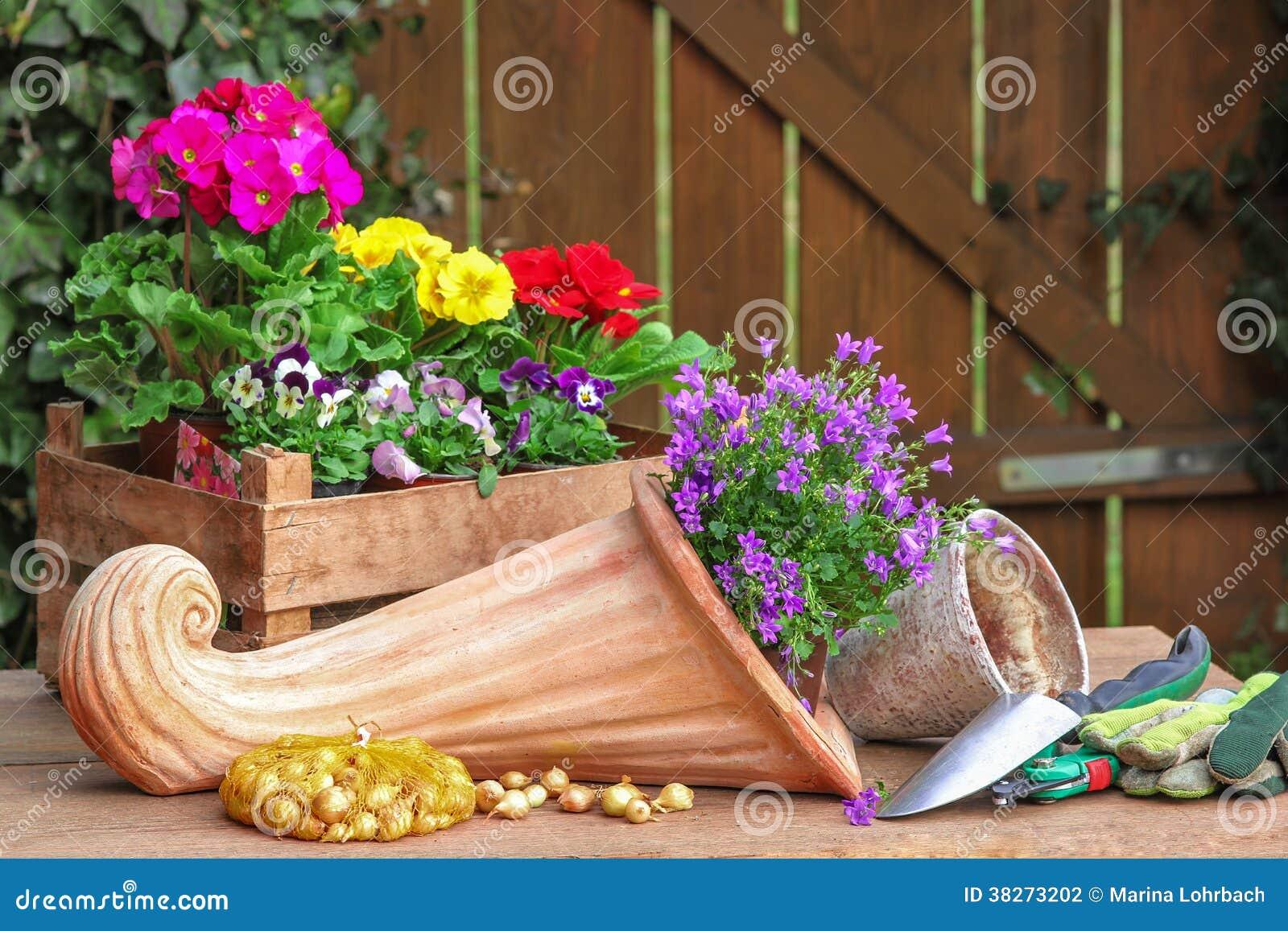 Fleurs planter corne d 39 abondance de terre cuite photographie stock image 38273202 - Fleur a planter ...