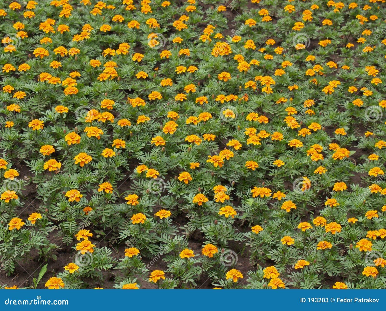 Fleurs [3]