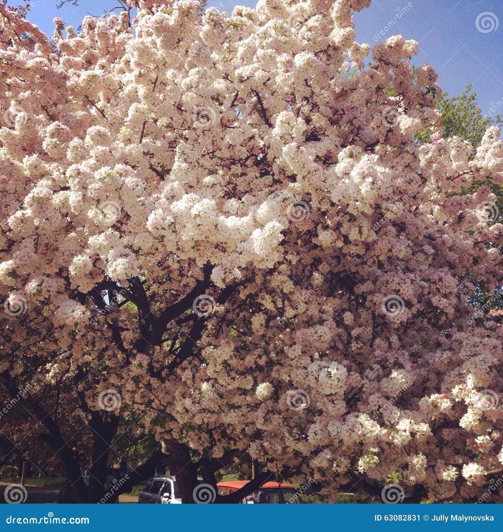 Download Fleurs image stock. Image du fleurs, beau, ressort, blanc - 63082831