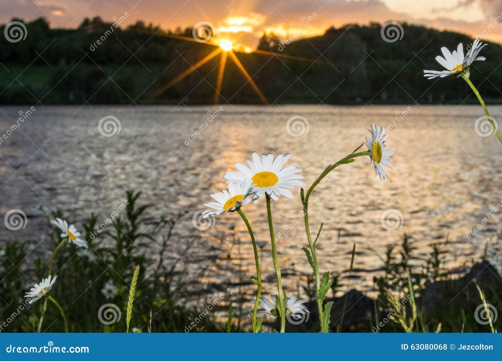 Download Fleurs au crépuscule photo stock. Image du scène, sunset - 63080068