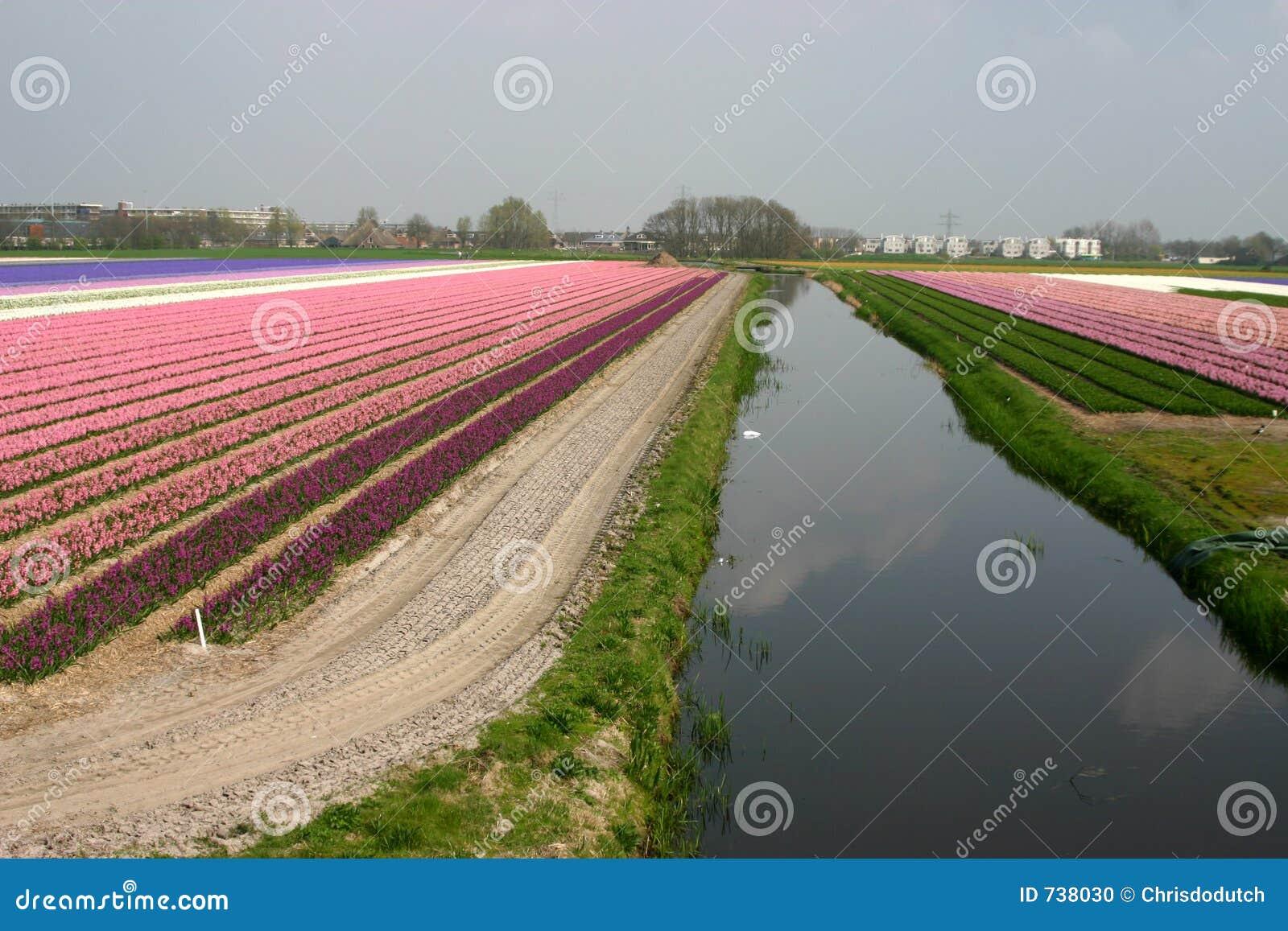 Fleurs avec le canal