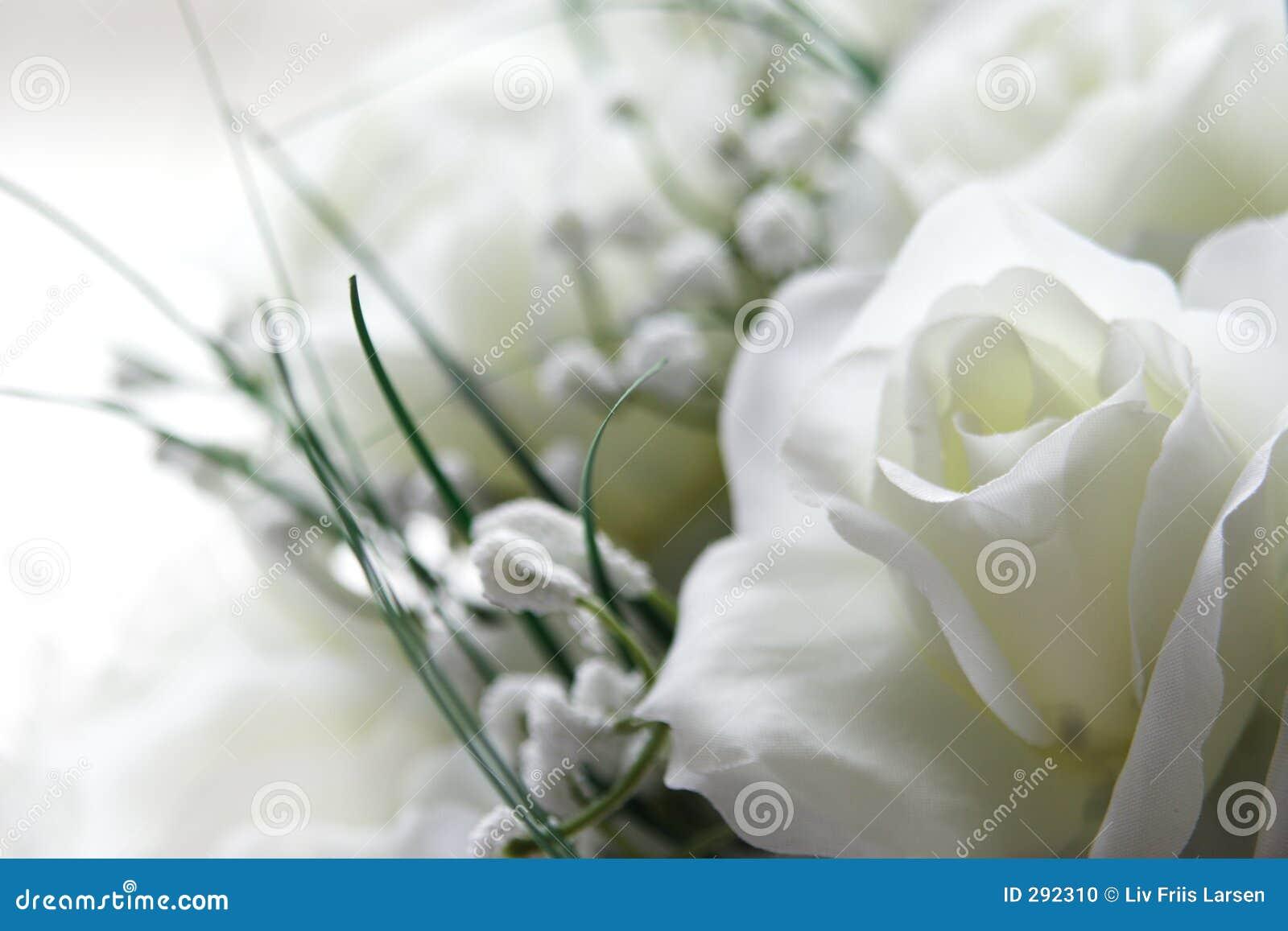 Fleurs blanches photo stock image du doux flore roses 292310 - Foto van sallon ...