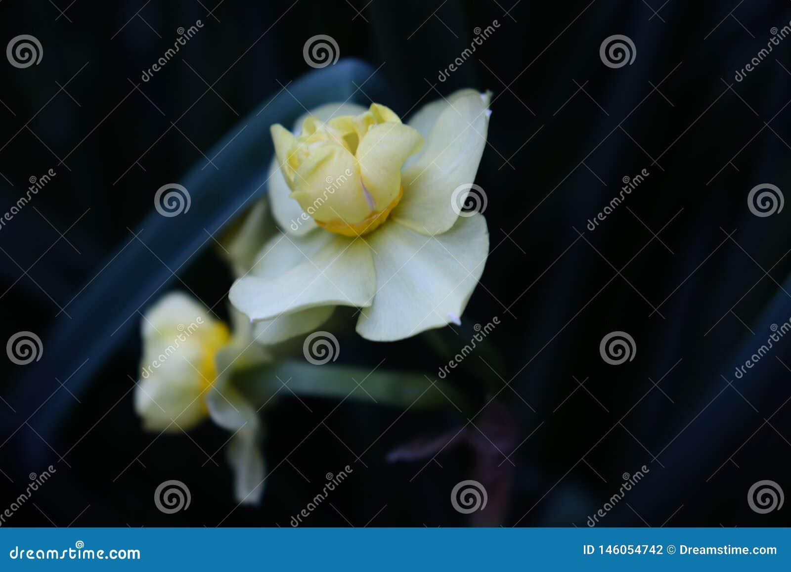 Fleurs blanches avec la branche verte