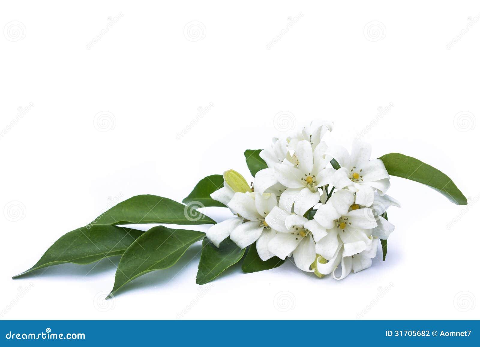 fleurs blanches et vertes. Black Bedroom Furniture Sets. Home Design Ideas