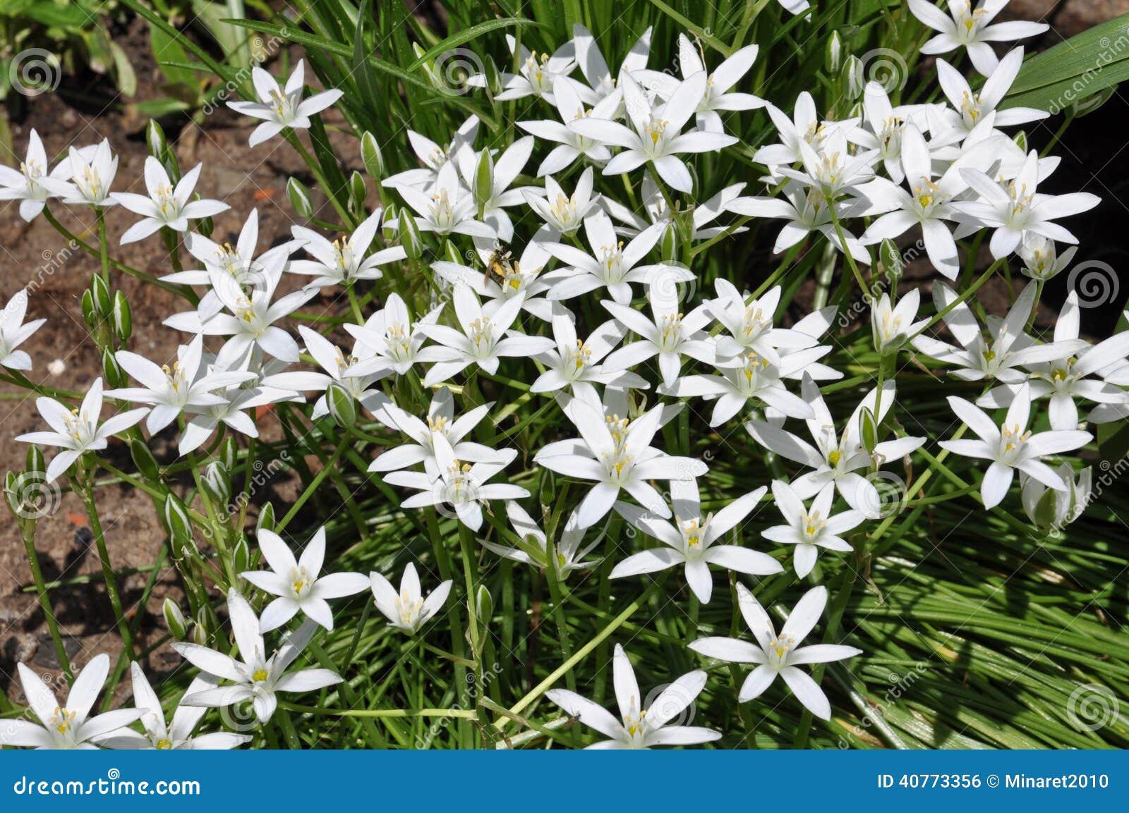 Fleurs blanches dans le jardin photo stock image 40773356 for Jardin de fleurs blanches