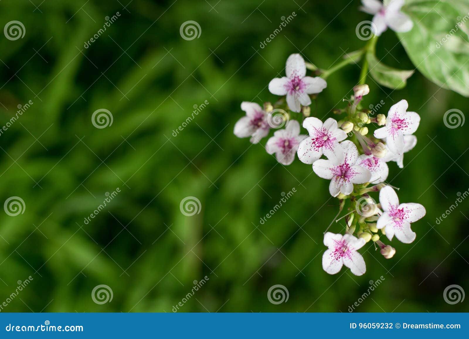 Fleurs blanches de jardin