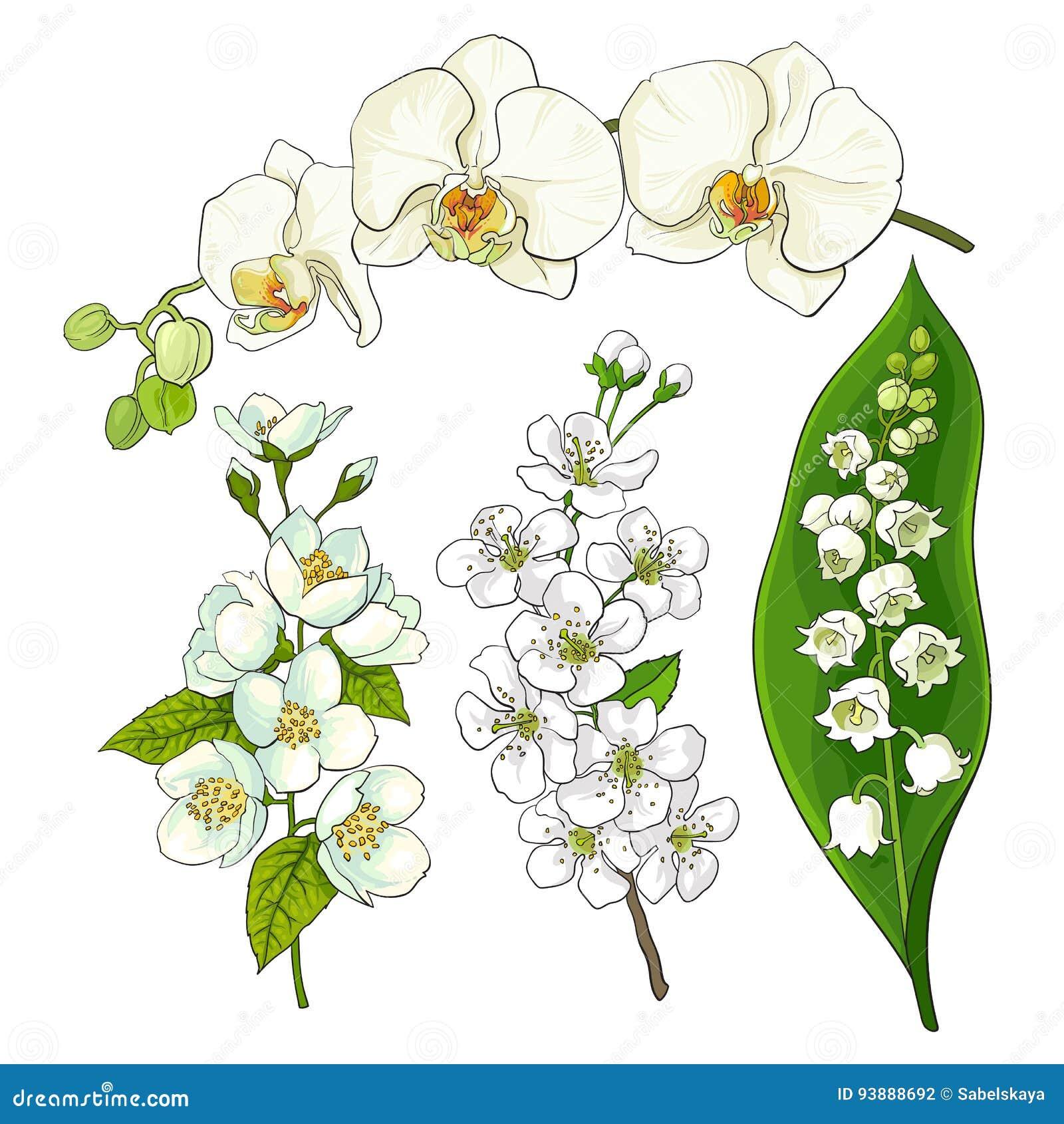 Fleurs Blanches Le Muguet Orchidée Pomme Fleurs De