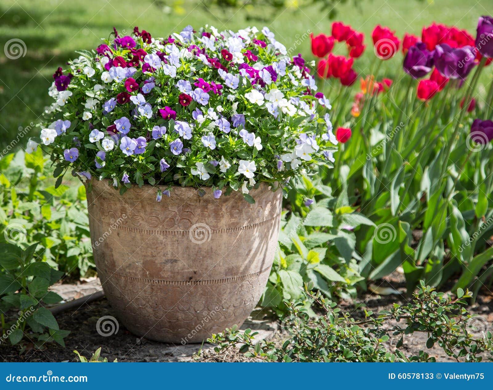 fleurs color es de pens e dans le pot en c ramique image stock image du centrale jaune 60578133. Black Bedroom Furniture Sets. Home Design Ideas