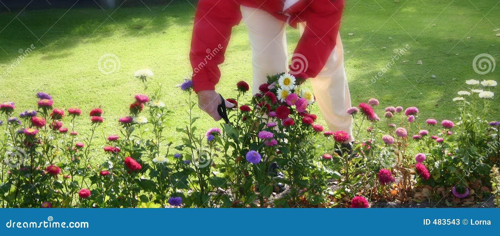 Fleurs coupées, faisant du jardinage