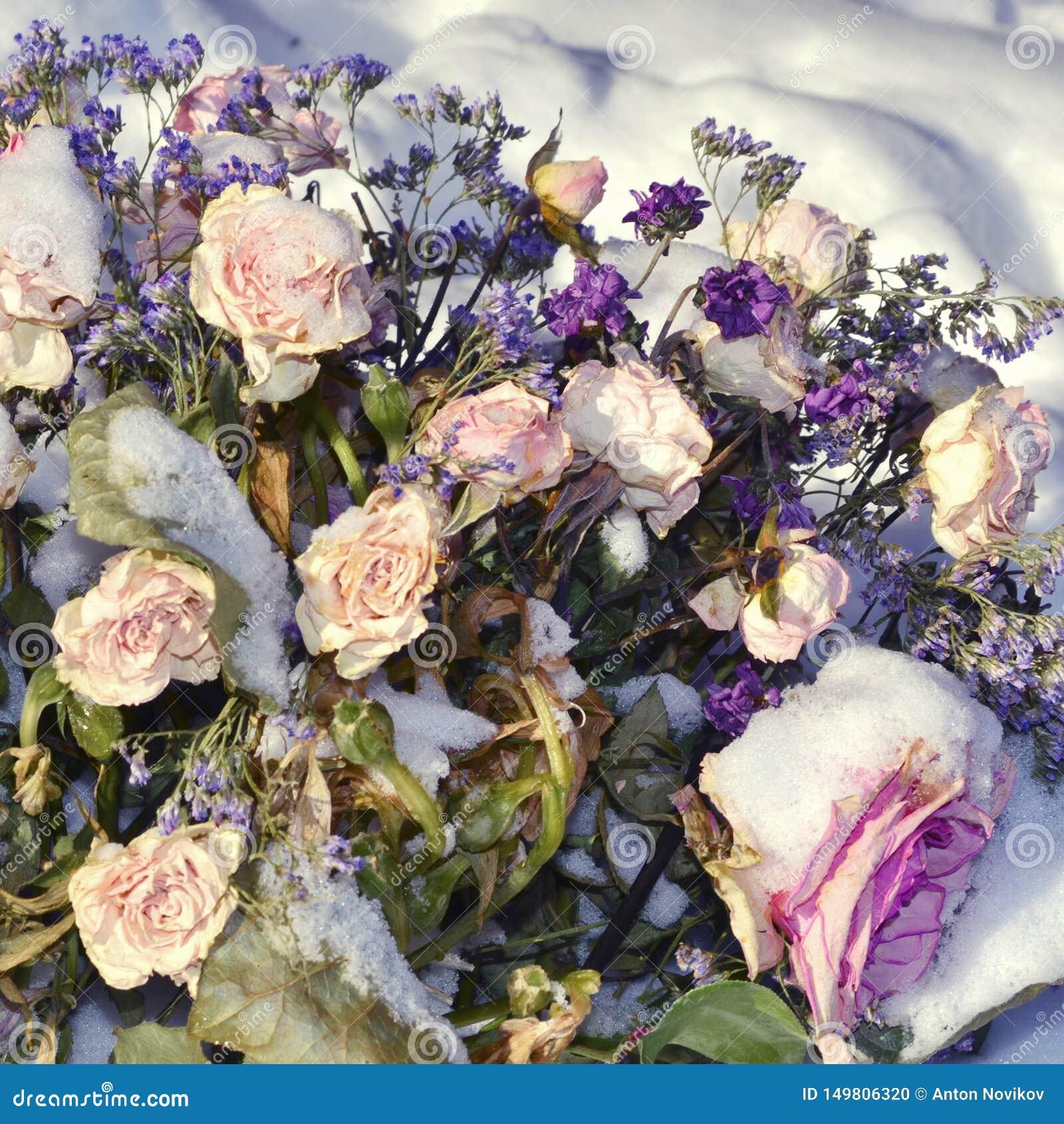 Fleurs couvertes de neige et fanées Amour rejet? Mauvaise datte