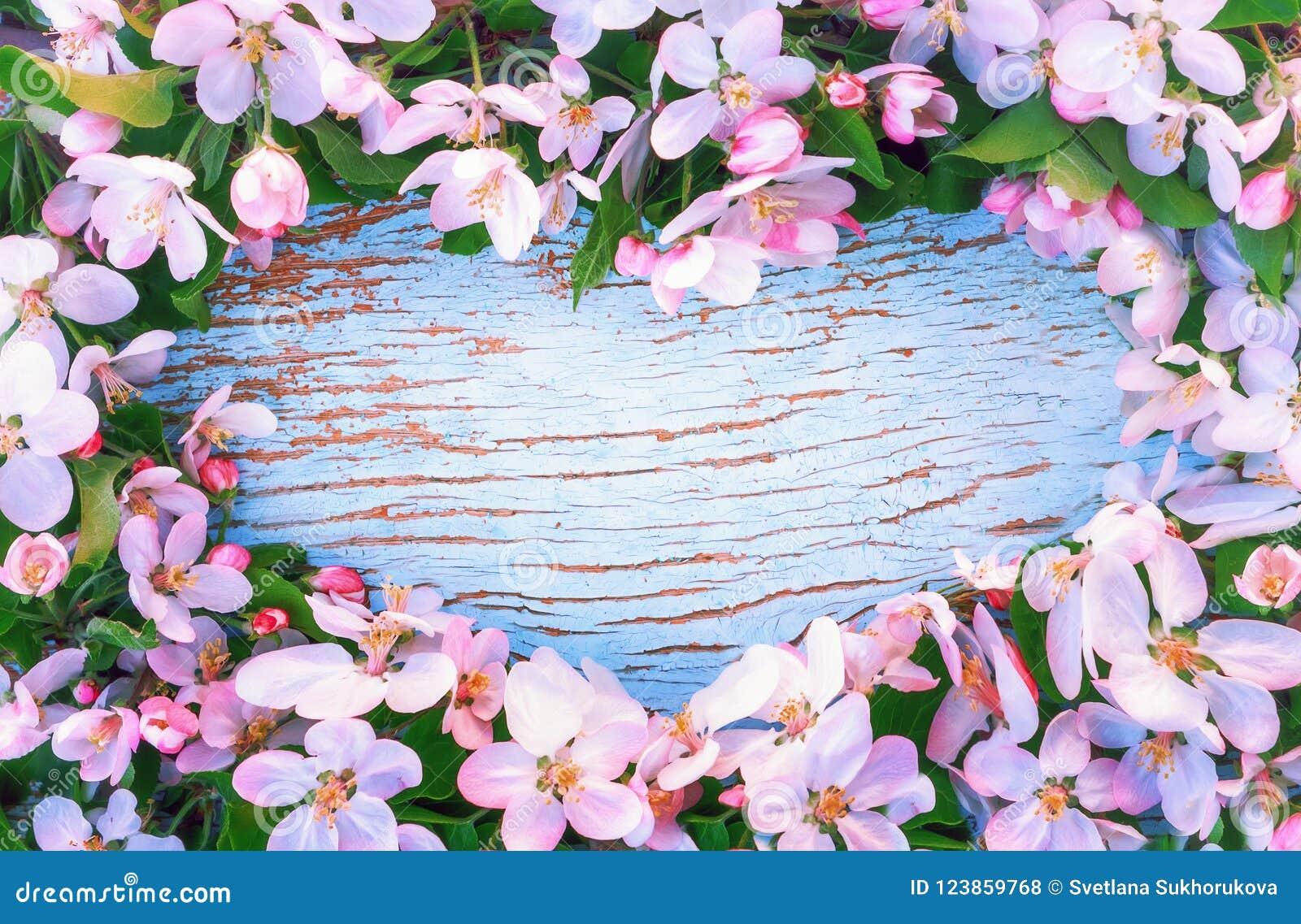 Fleur De Sous Bois Bleue fleurs d'apple autour du fond en bois bleu en forme de coeur