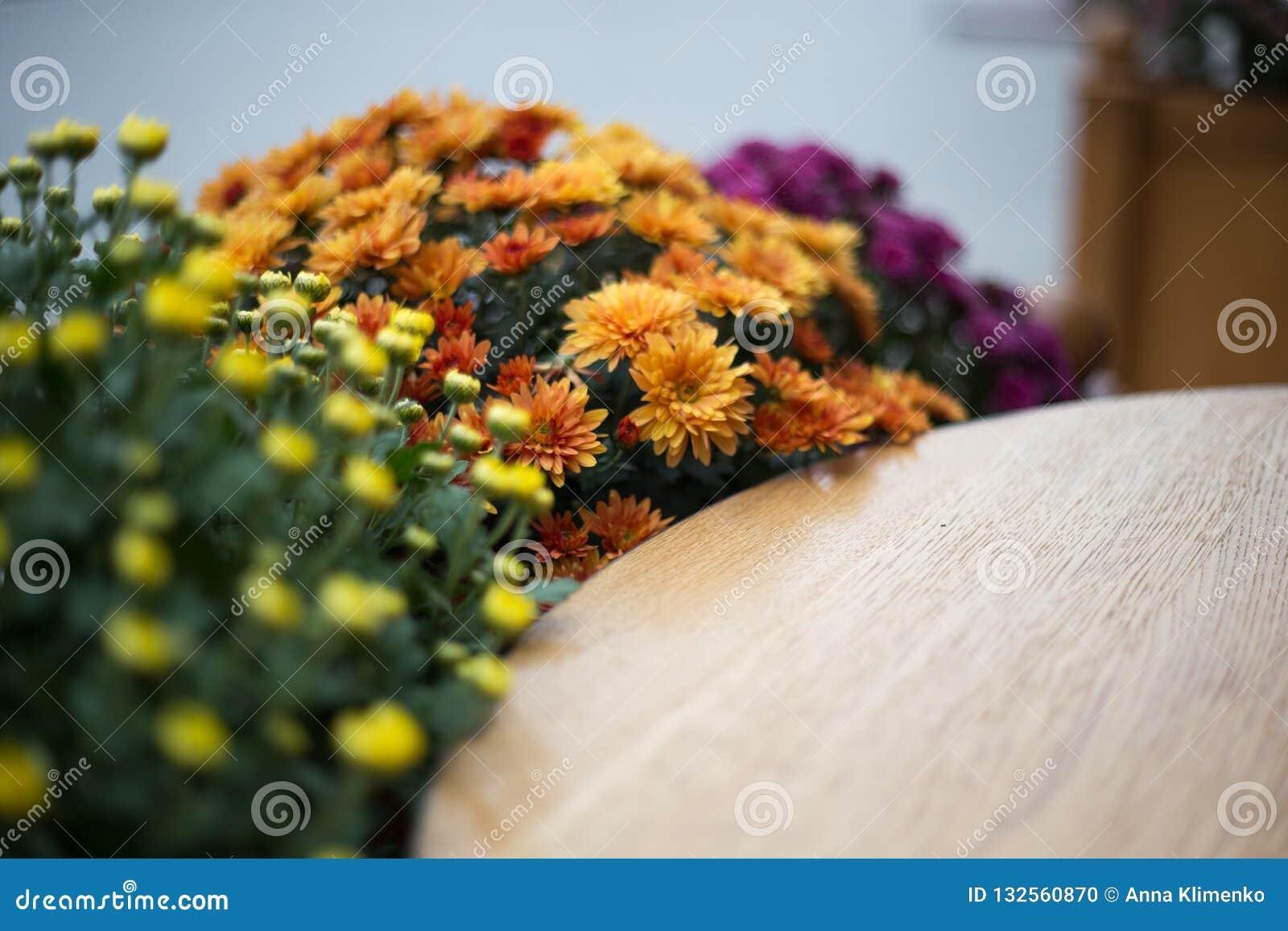 Fleurs d automne dans le café de rue
