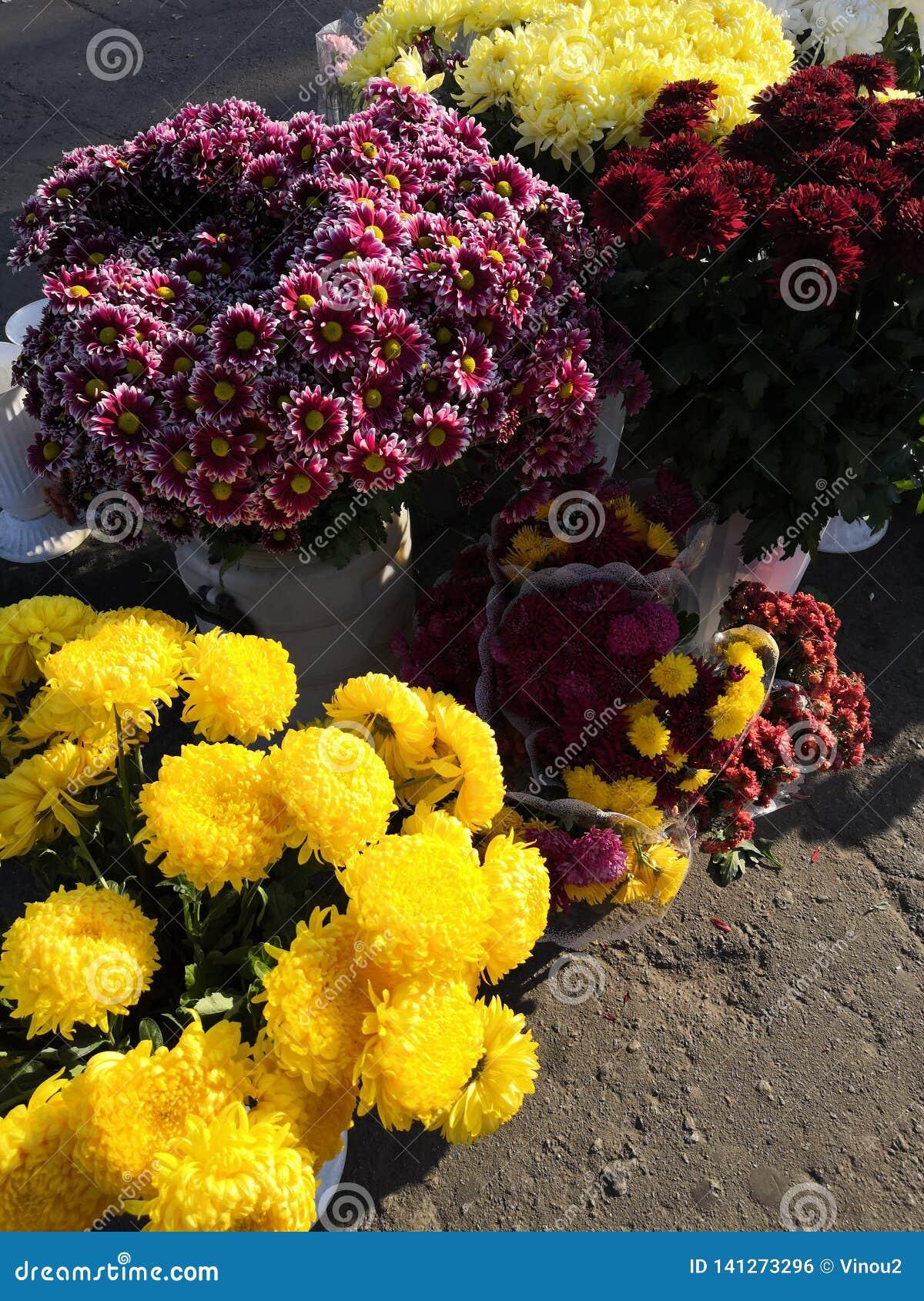 Fleurs d automne sur l asphalte