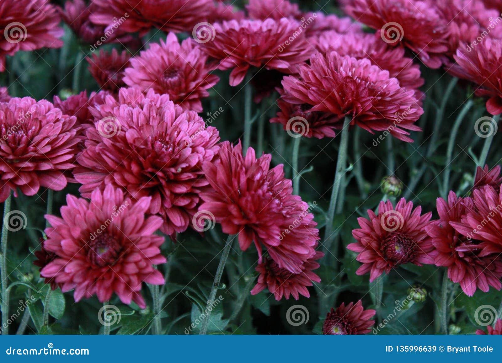 Fleurs d'avril image stock. Image du fleurs, rose, avril ...