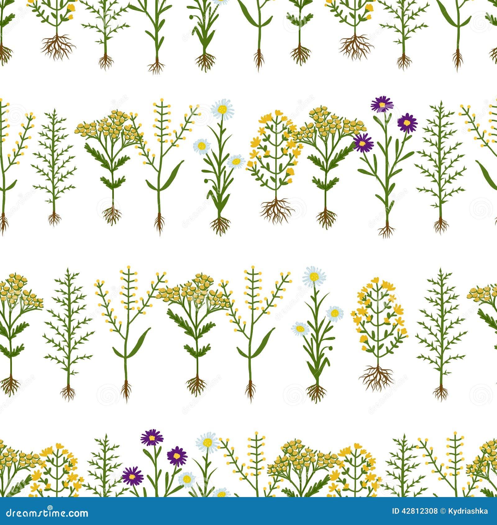 Fleurs D'herbier Avec Des Racines, Modèle Sans Couture Illustration de Vecteur - Illustration du ...