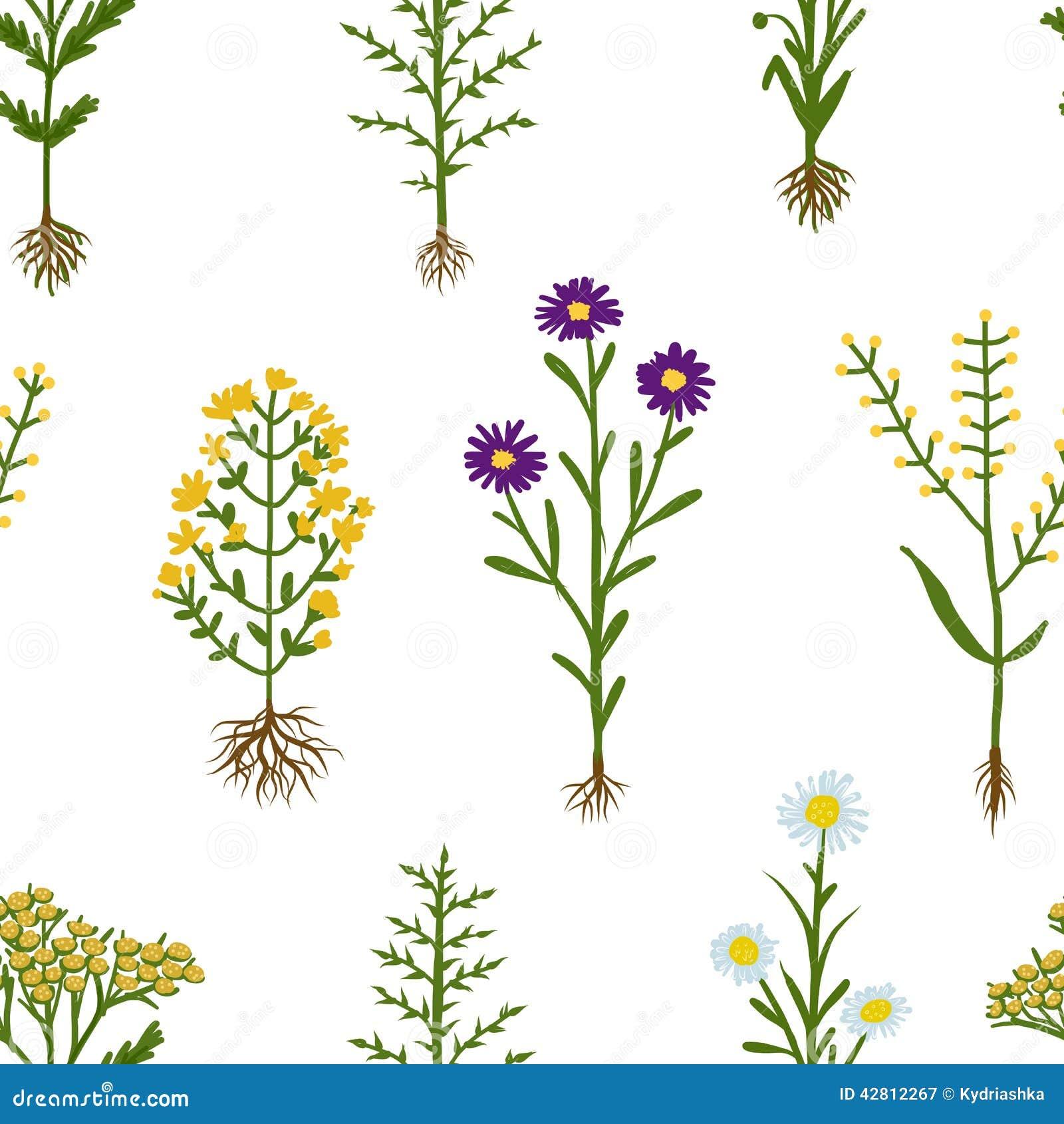 fleurs d 39 herbier avec des racines mod le sans couture illustration de vecteur image 42812267. Black Bedroom Furniture Sets. Home Design Ideas
