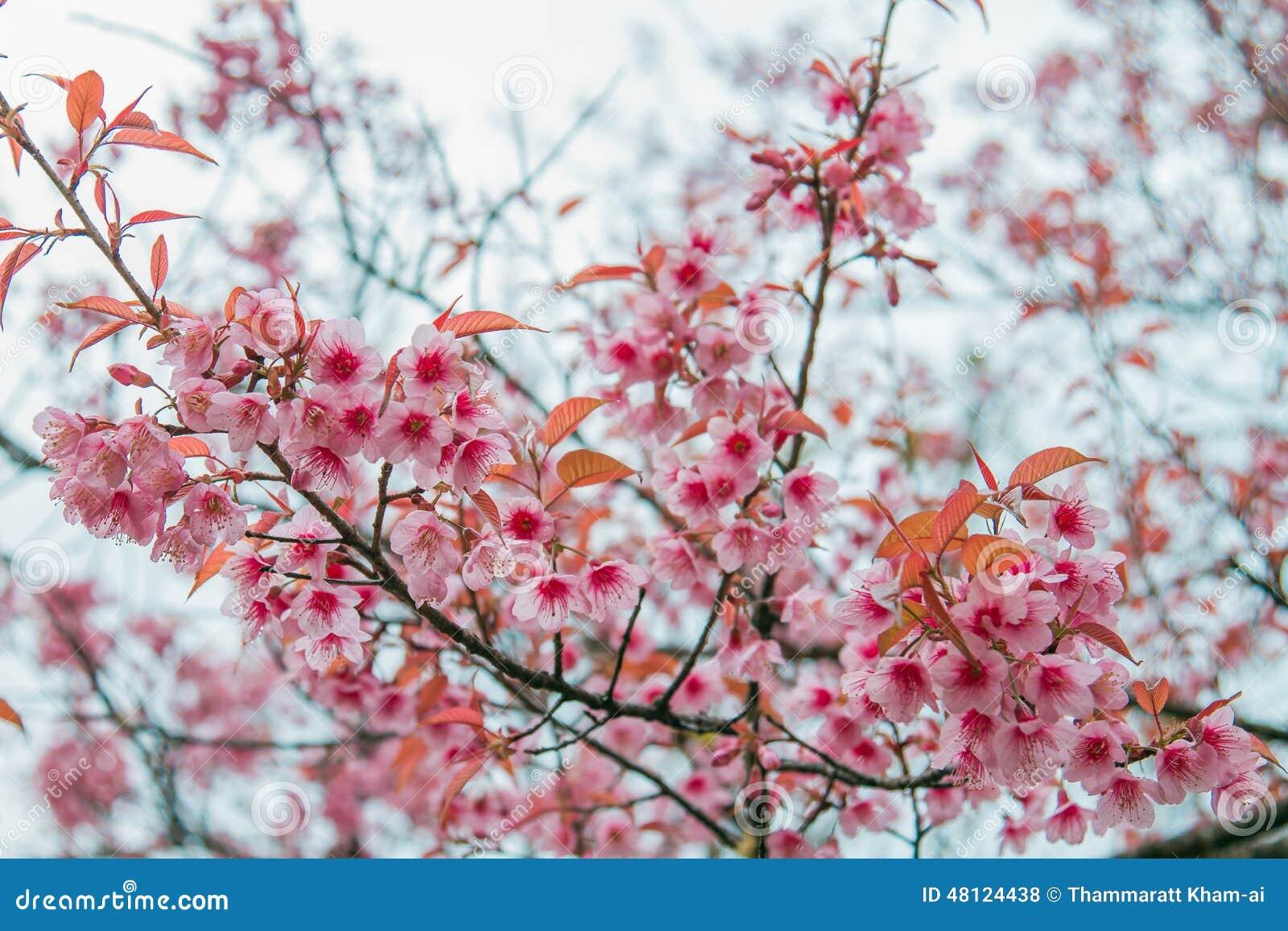 Fleurs d 39 hiver photo stock image 48124438 - Fleurs en hiver ...