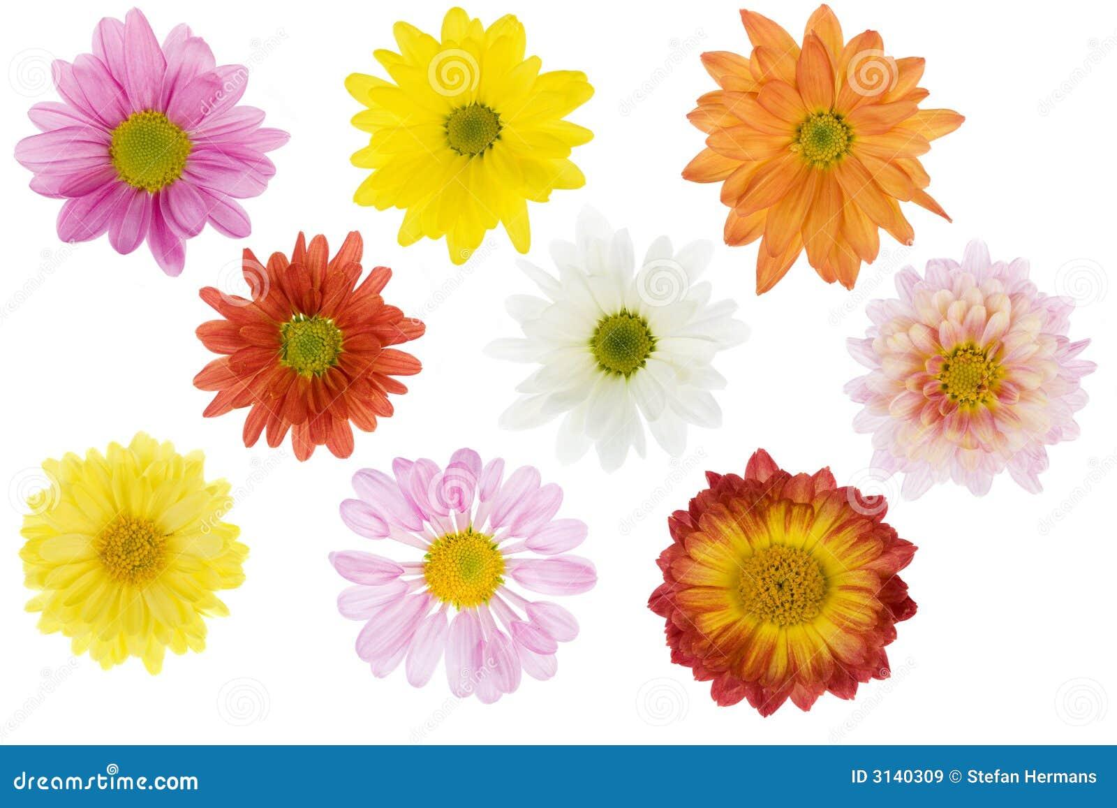 Fleurs d isolement