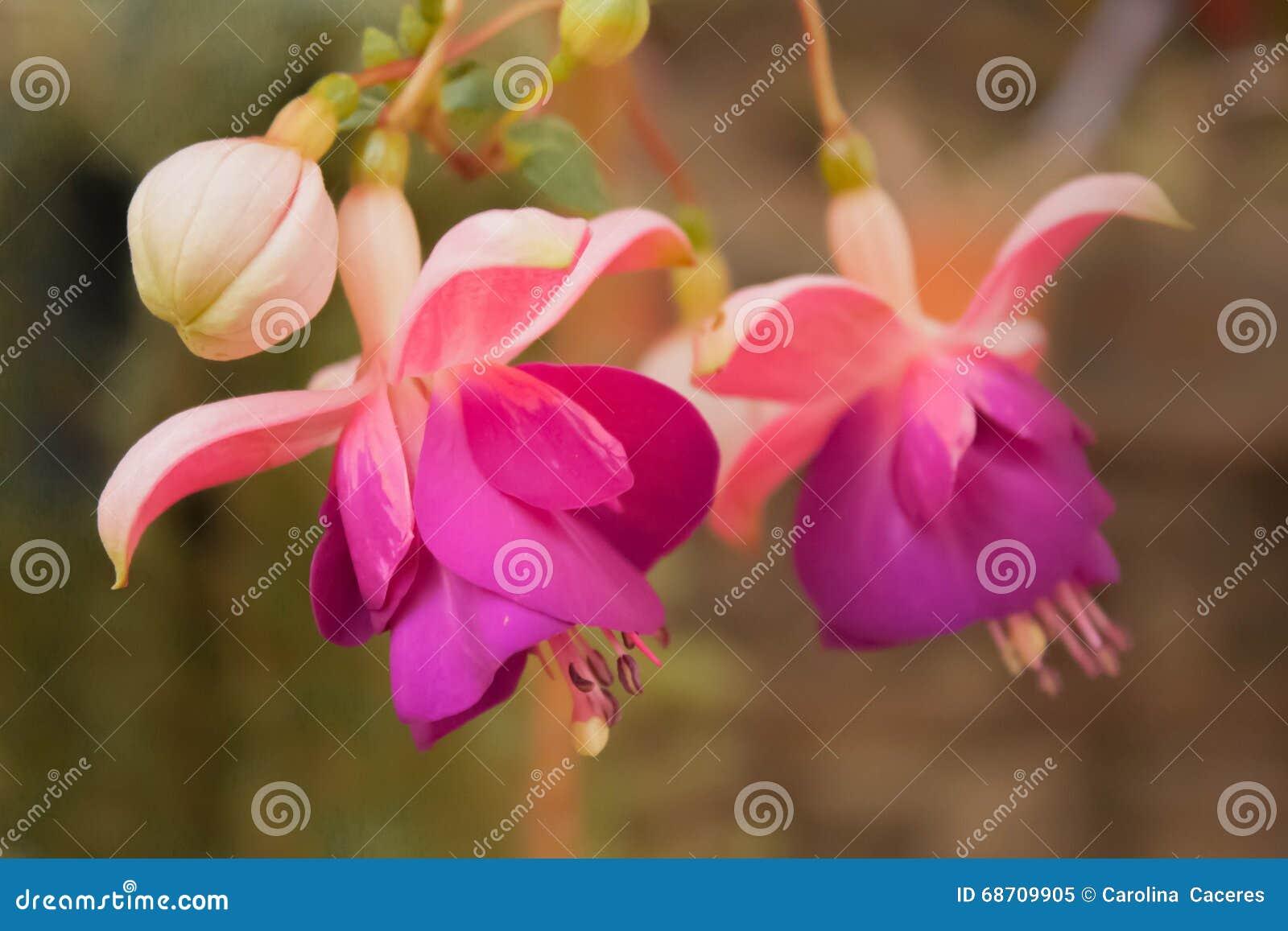 Fleurs 1 d\'octobre image stock. Image du argentine, macro ...