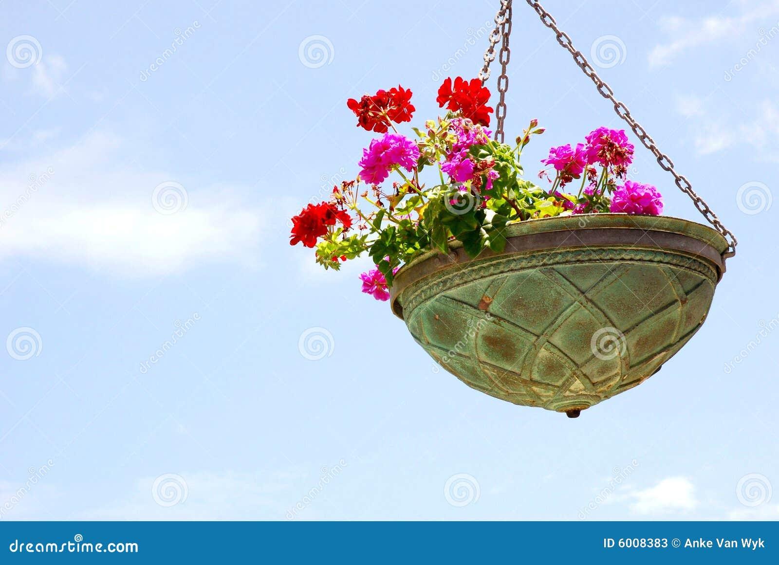 Fleurs dans le bac