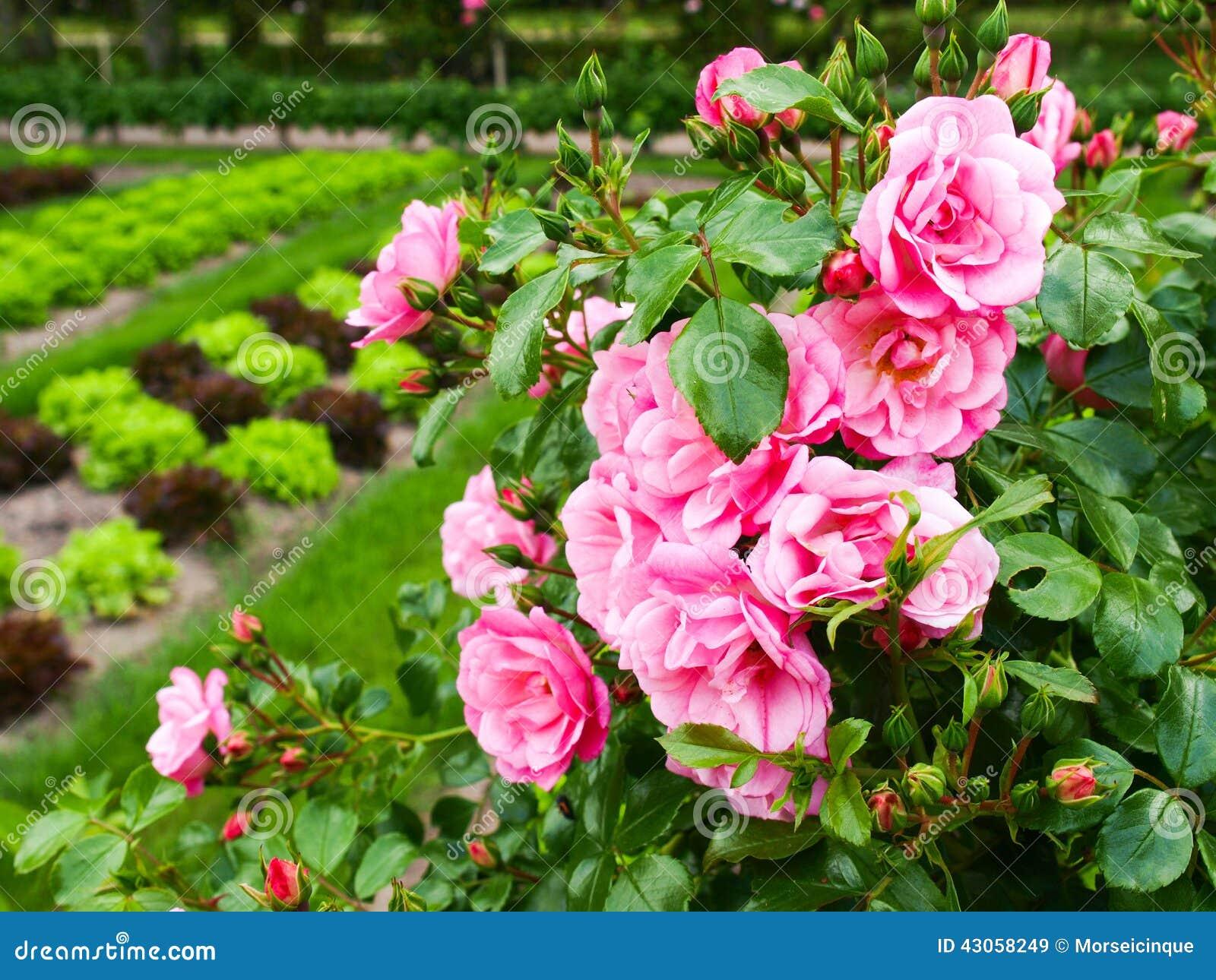 Fleurs dans le jardin photo stock image 43058249 for Fleurs dans le jardin