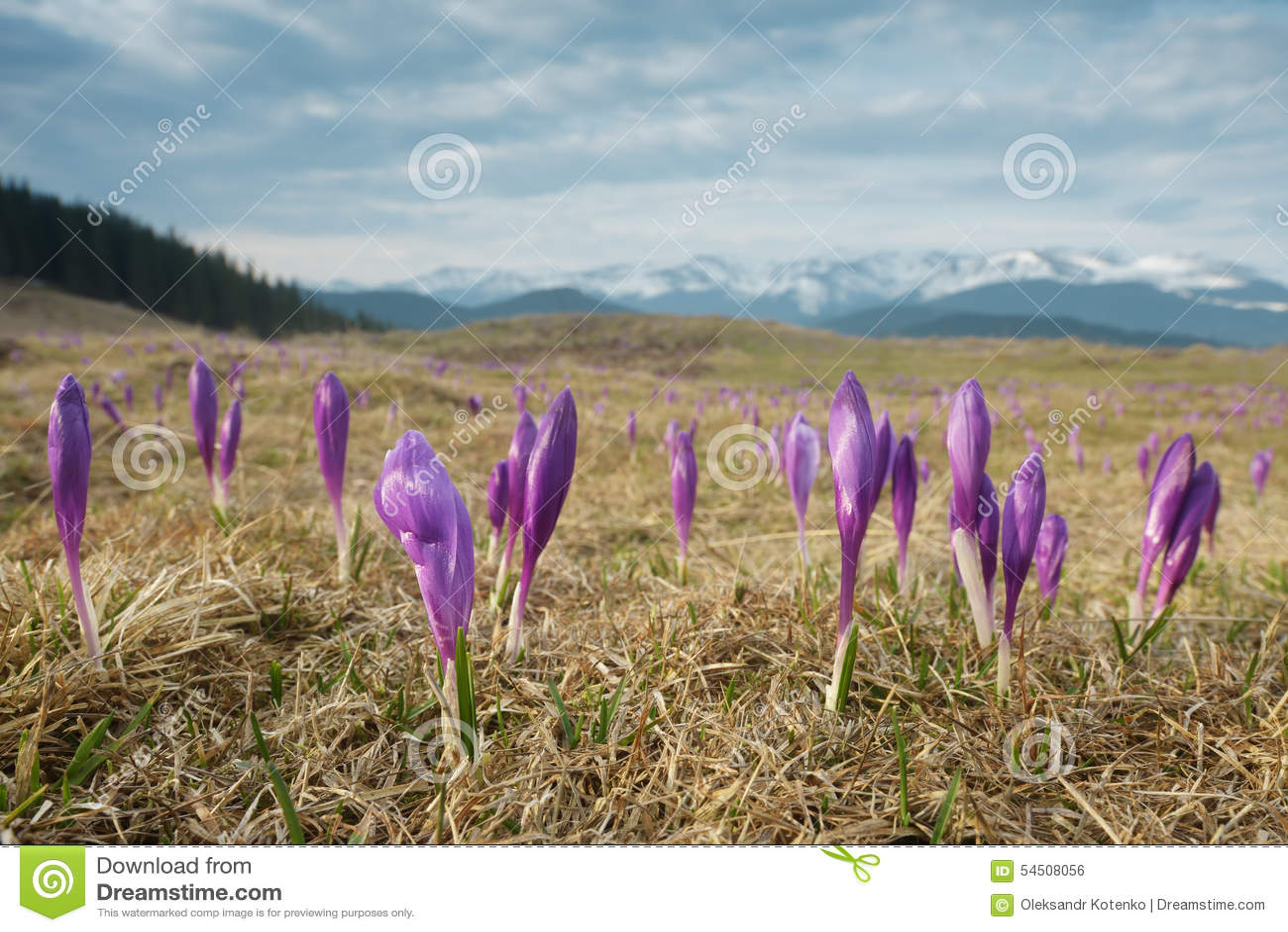 Fleurs dans les montagnes