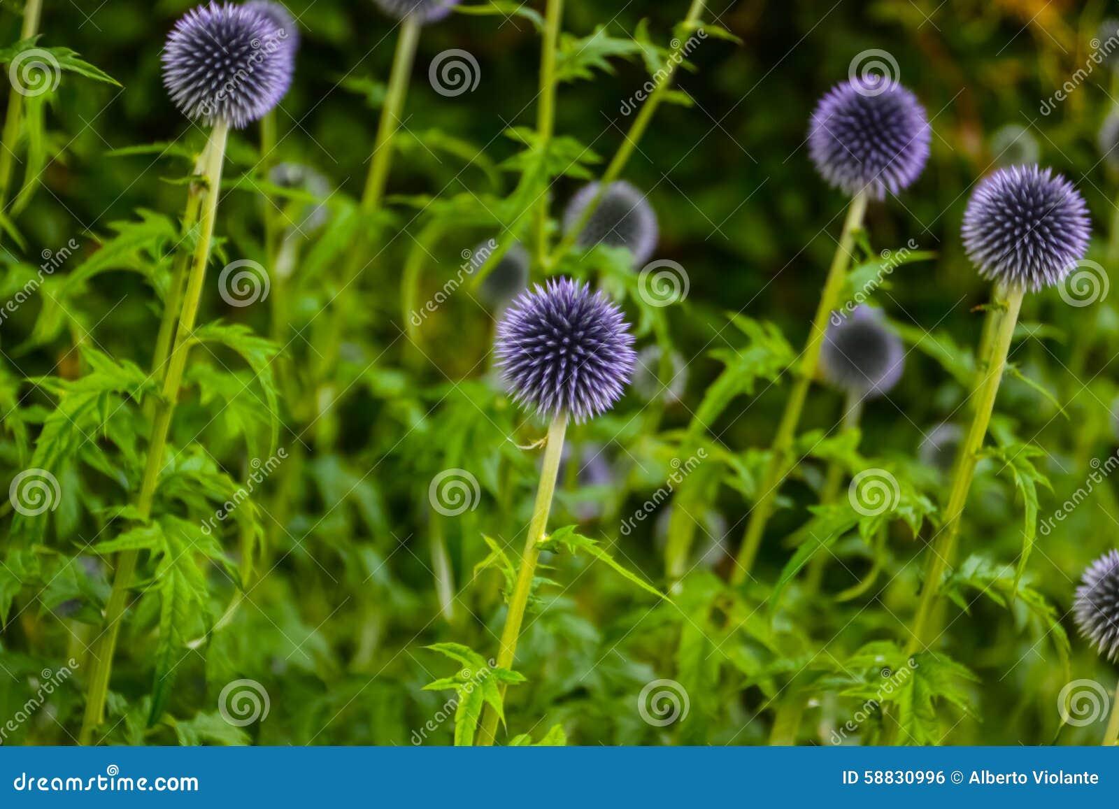 Fleurs de jardin sauvage for Fleurs dans un jardin