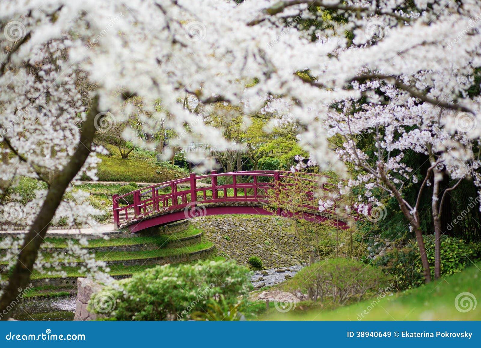 Fleurs de cerisier dans un jardin japonais photo stock for Un jardin de fleurs
