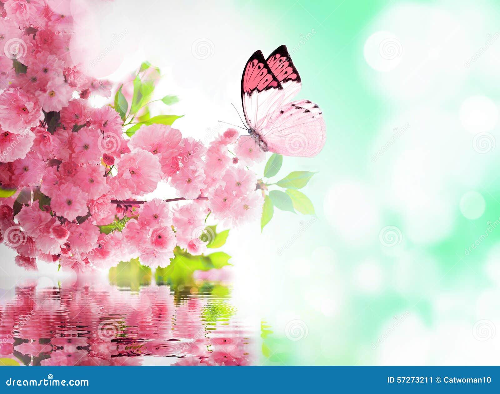 Fleurs de cerisier et papillon image stock image du - Image papillon et fleur ...