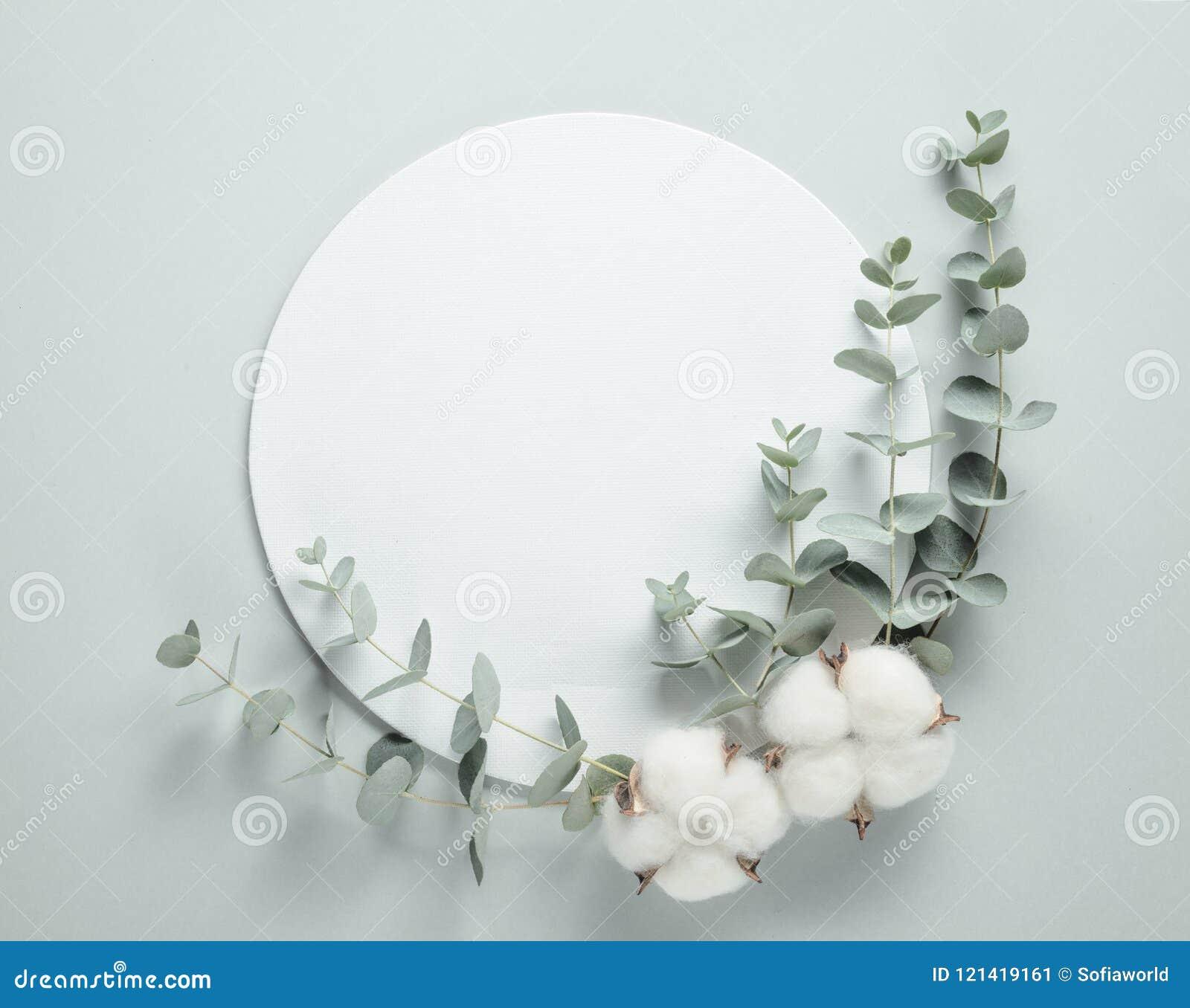 Branche Fleur De Coton fleurs de coton et branches d'eucalyptus image stock - image