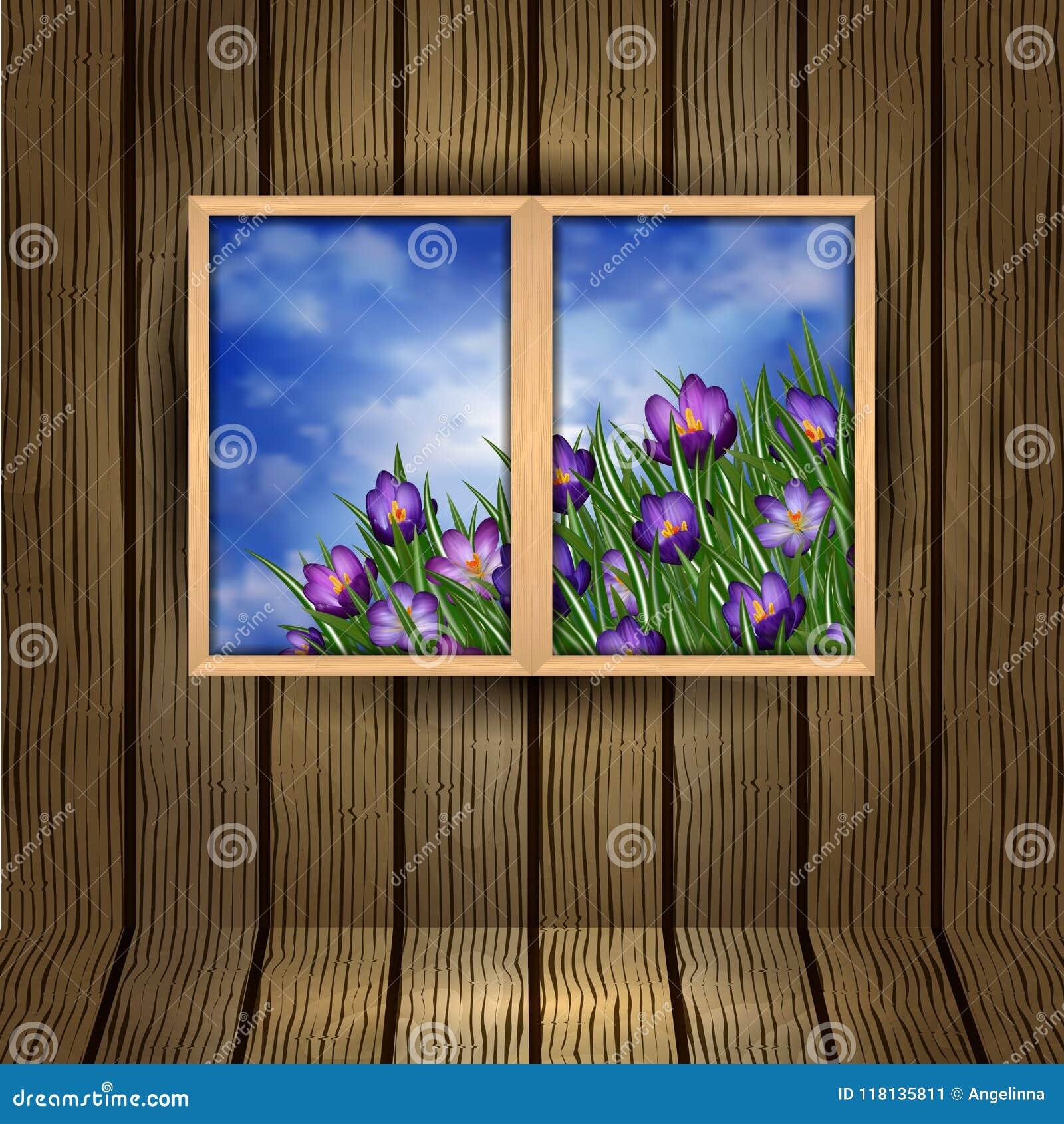 Fleurs de crocus en dehors de la fenêtre