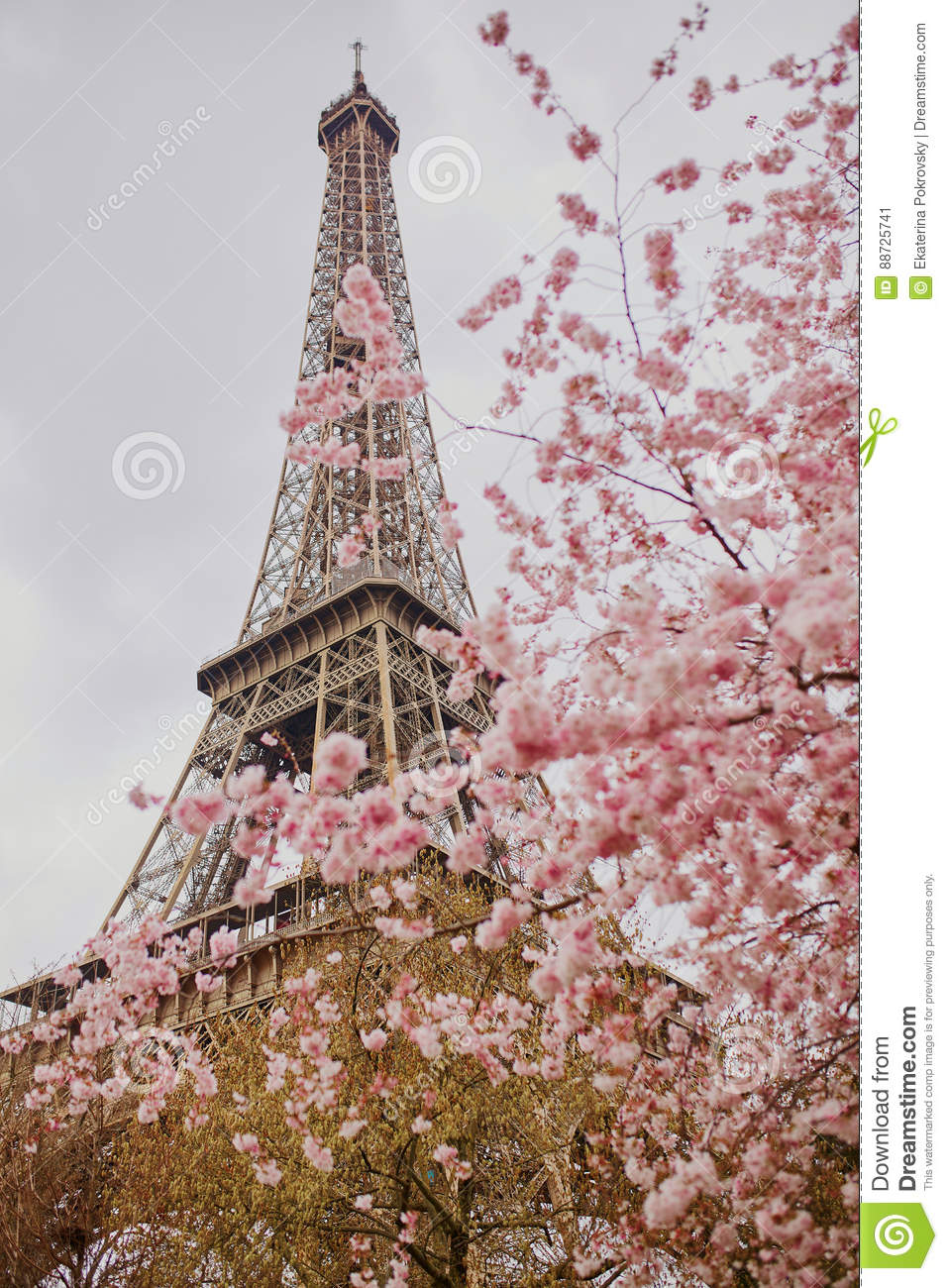 fleurs de fleurs de cerisier avec tour eiffel paris photo stock image 88725741. Black Bedroom Furniture Sets. Home Design Ideas